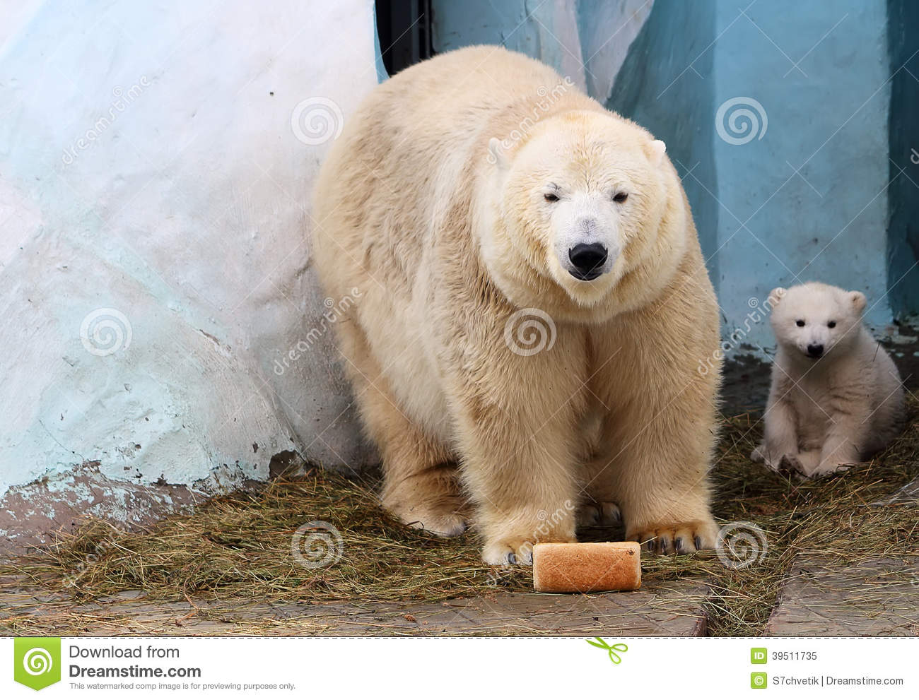 Bear and her cub with a loaf of bread