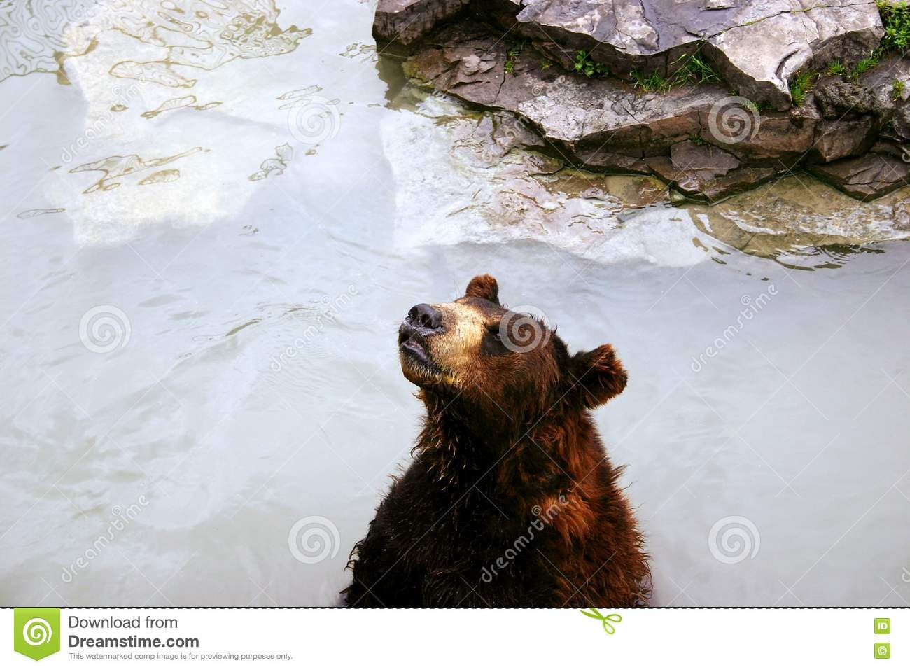 Bear in Lake
