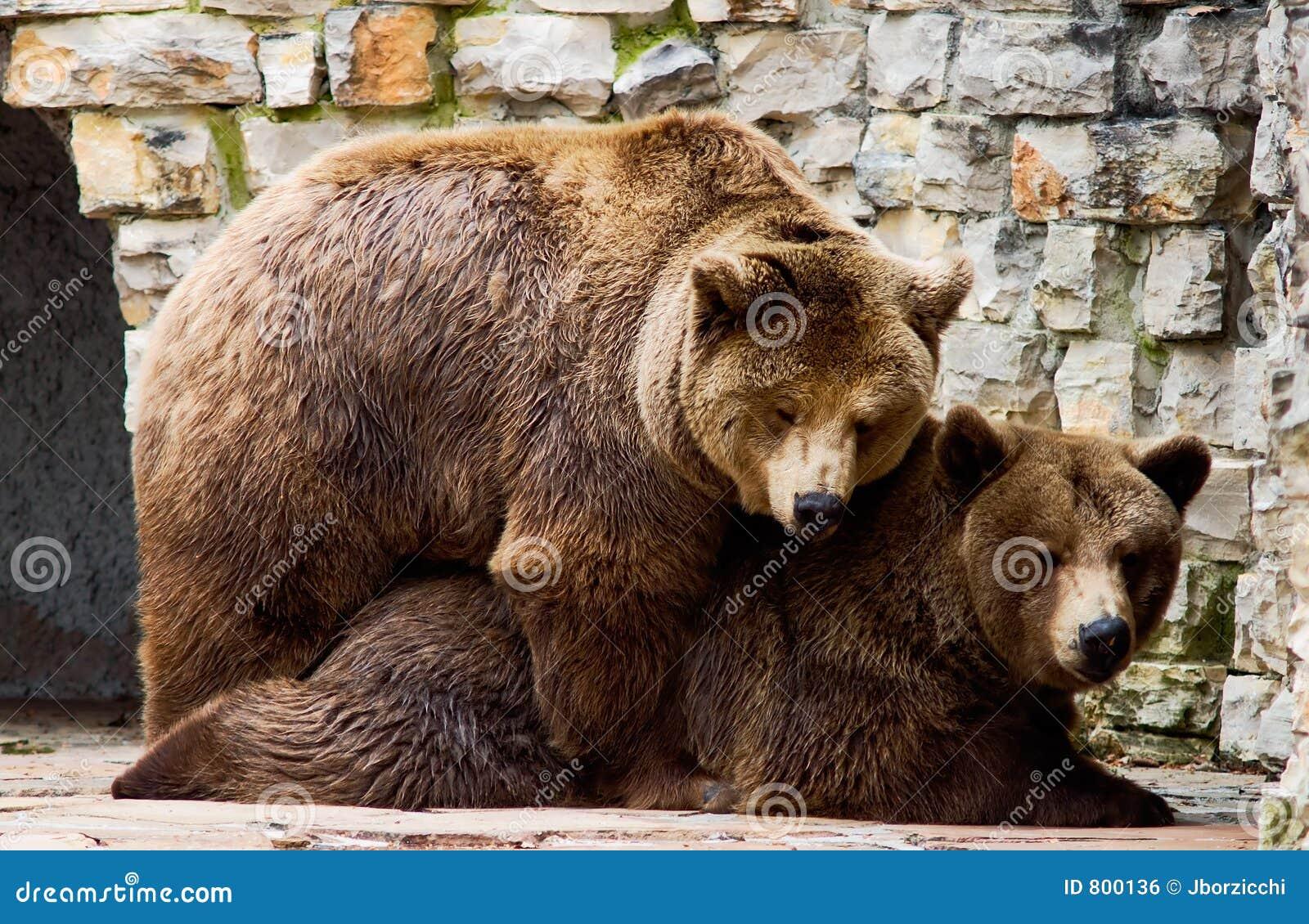 love bear: