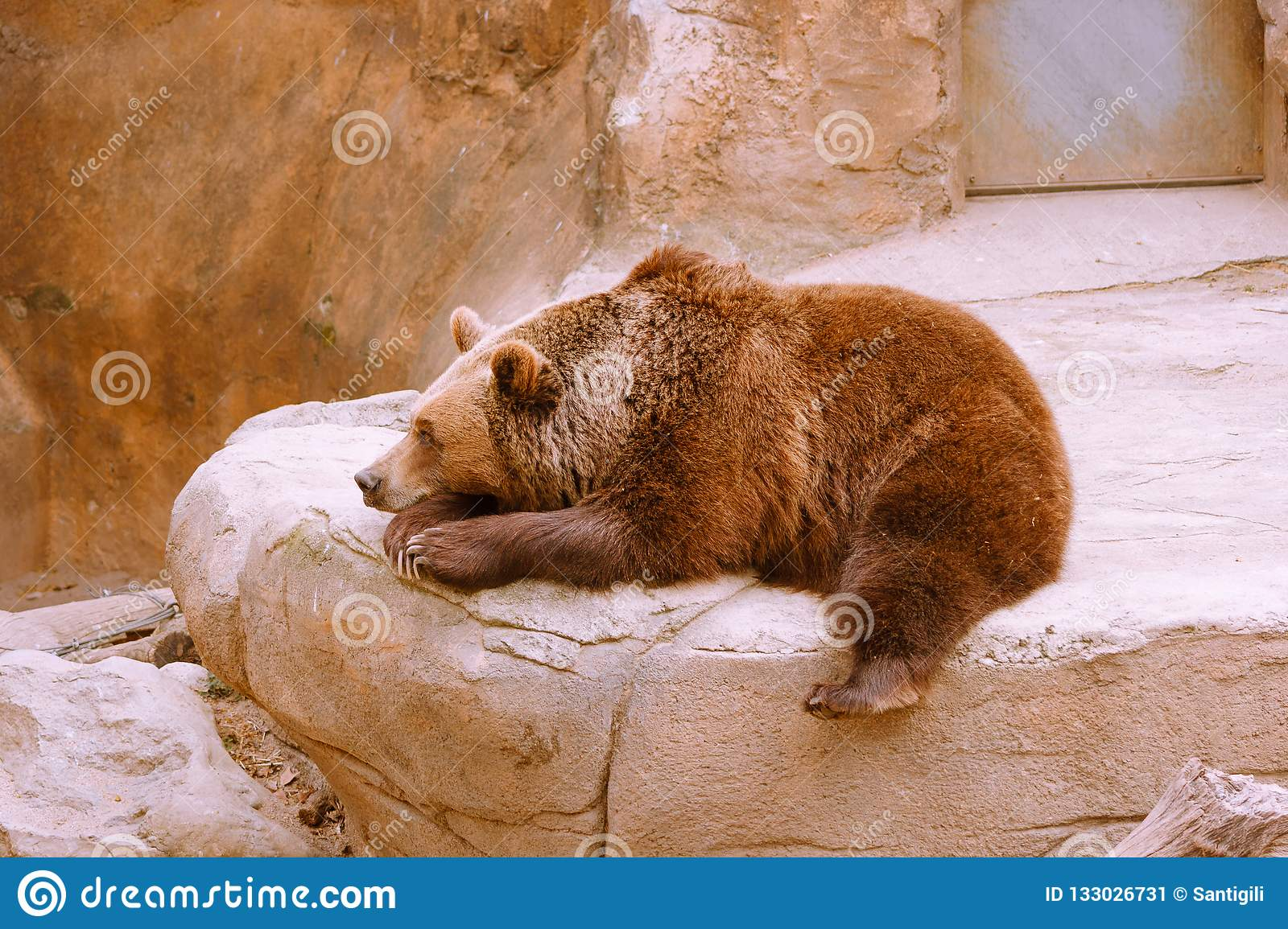 Bear resting on stone in zoo