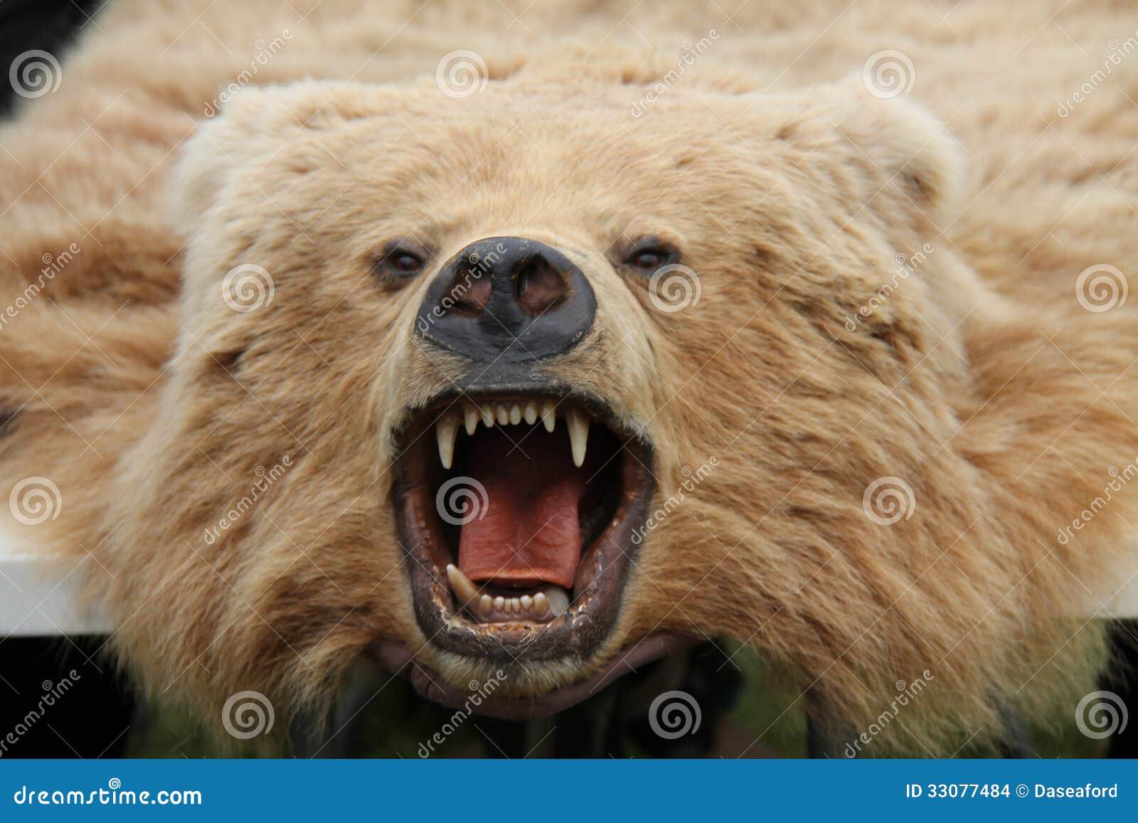 Bear Skin Rug. Stock Images