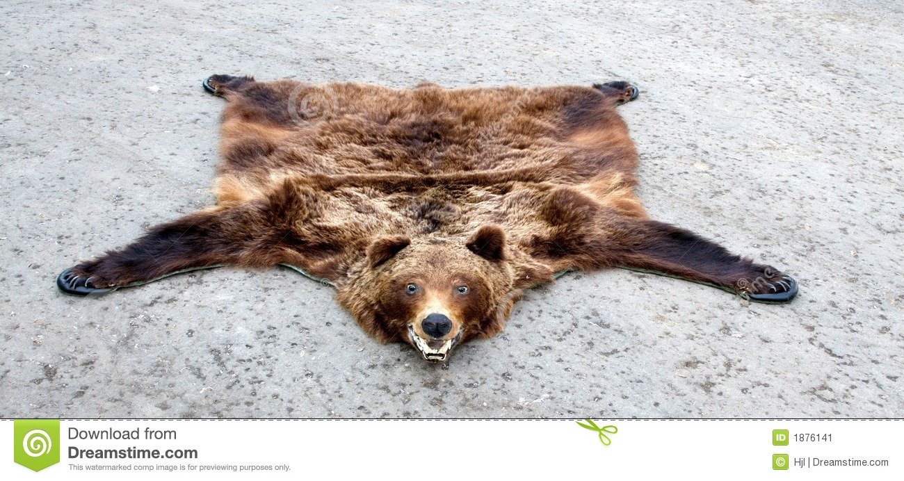 Bear Trophy Stock Image Image Of Taxidermy Teeth Soul
