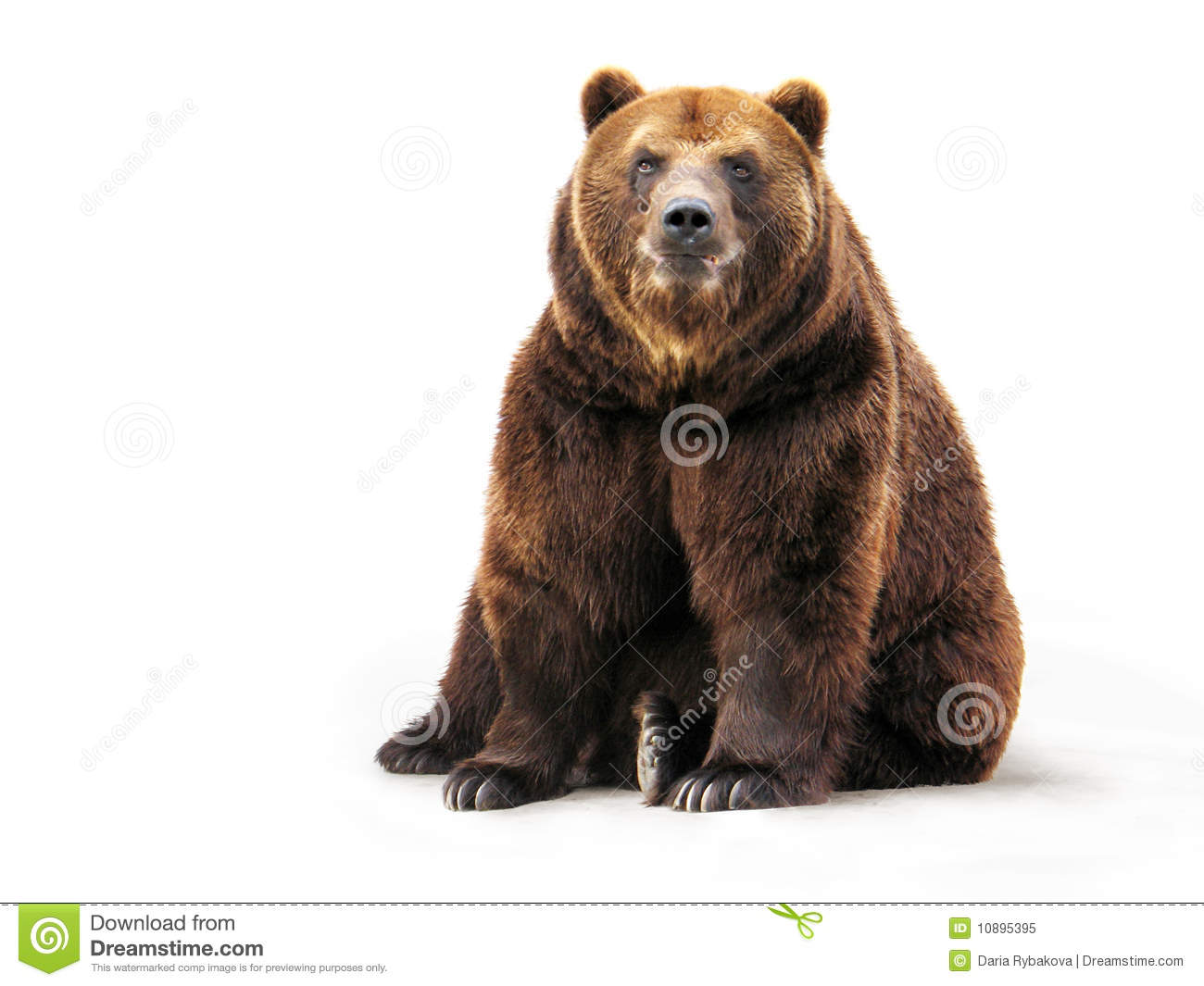 Bear on white