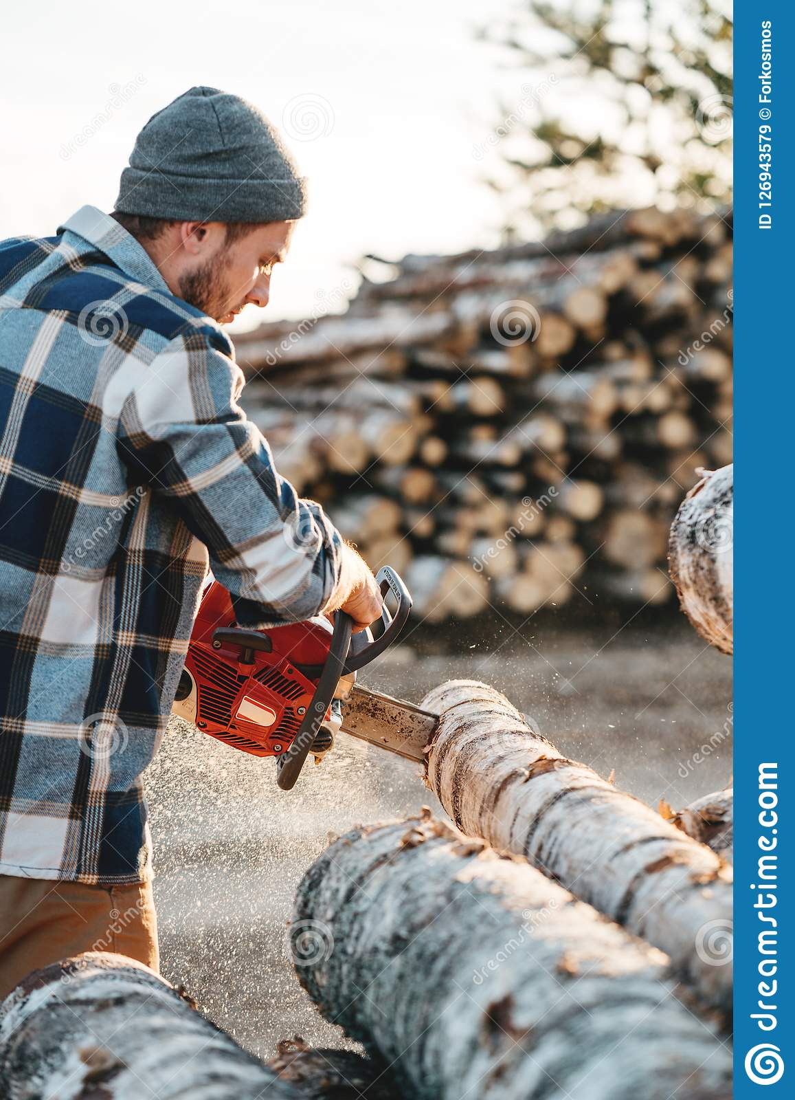 Bearded brutal lumberjack wearing plaid shirt sawing tree with chainsaw for work on sawmill. Wooden sawdust fly apart