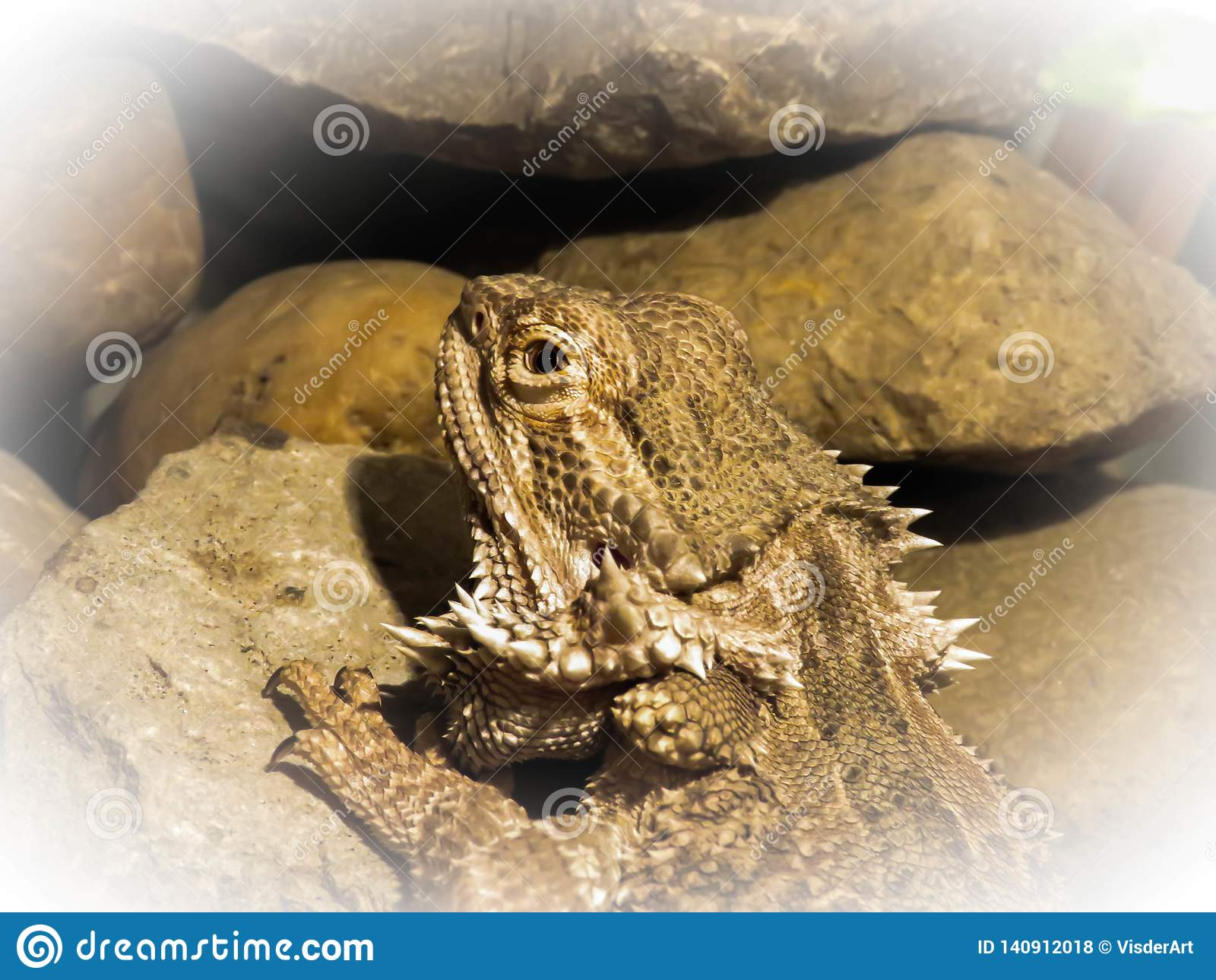 Bearded Dragon camouflage close up
