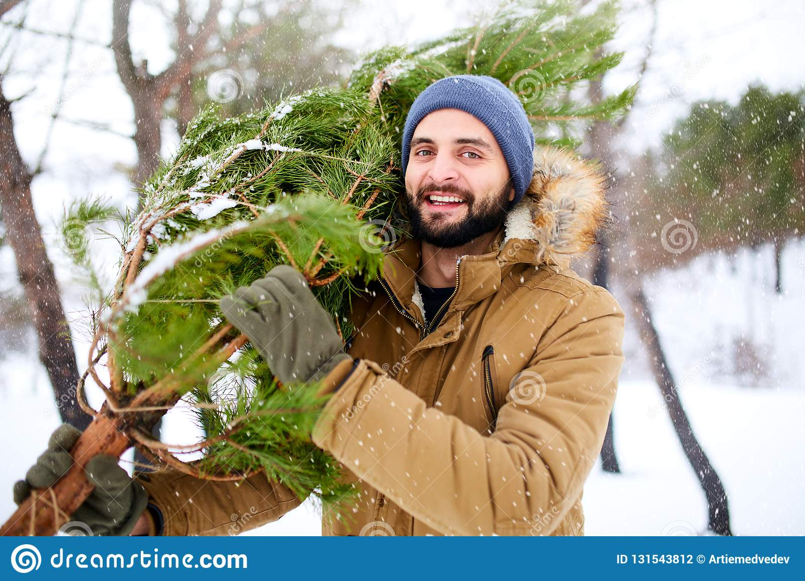 Bearded man carrying freshly cut down christmas tree in forest. Young lumberjack bears fir tree on his shoulder in the