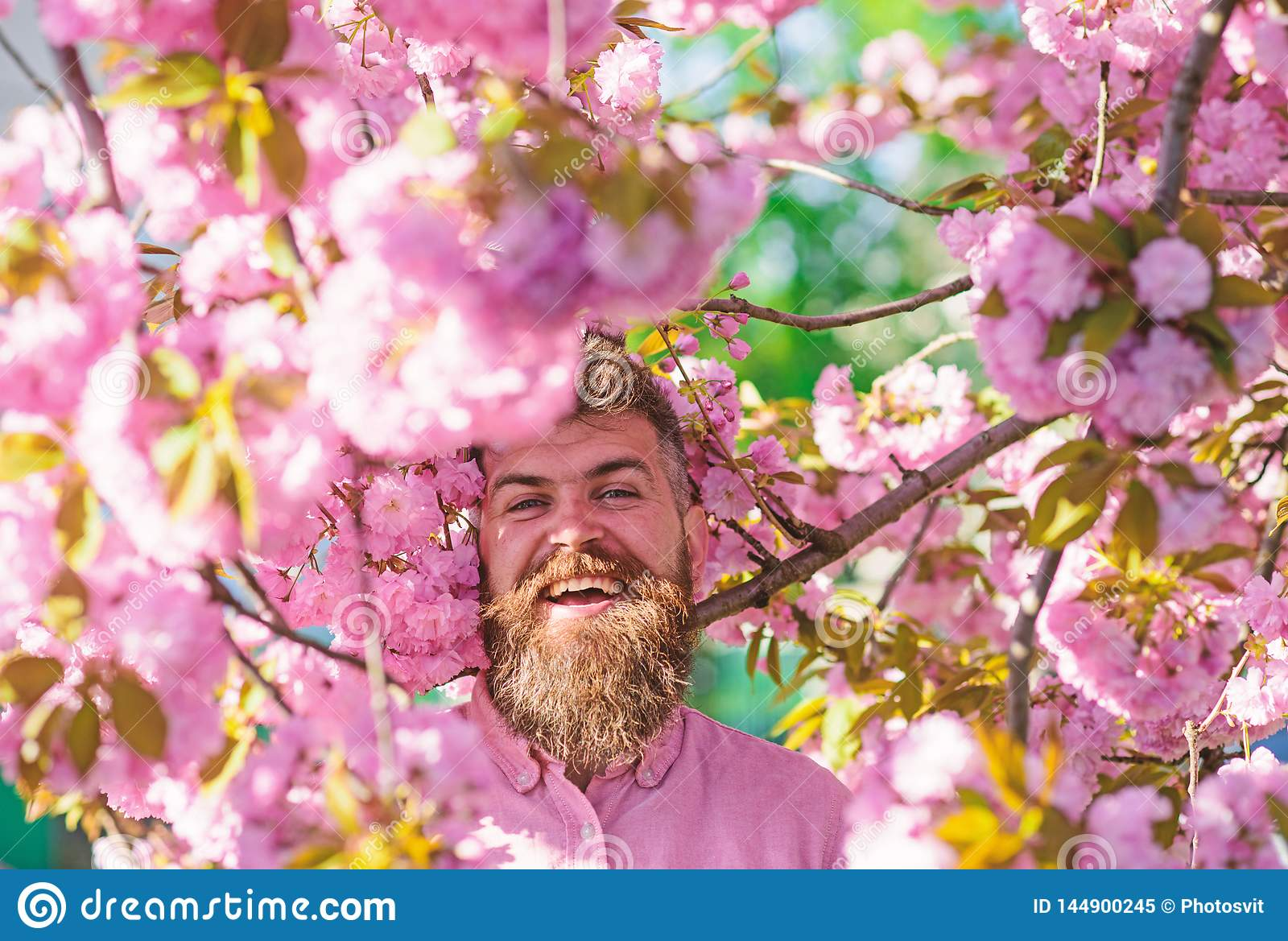 Bearded man with stylish haircut with sakura flowers on background. Man with beard and mustache on smiling face near