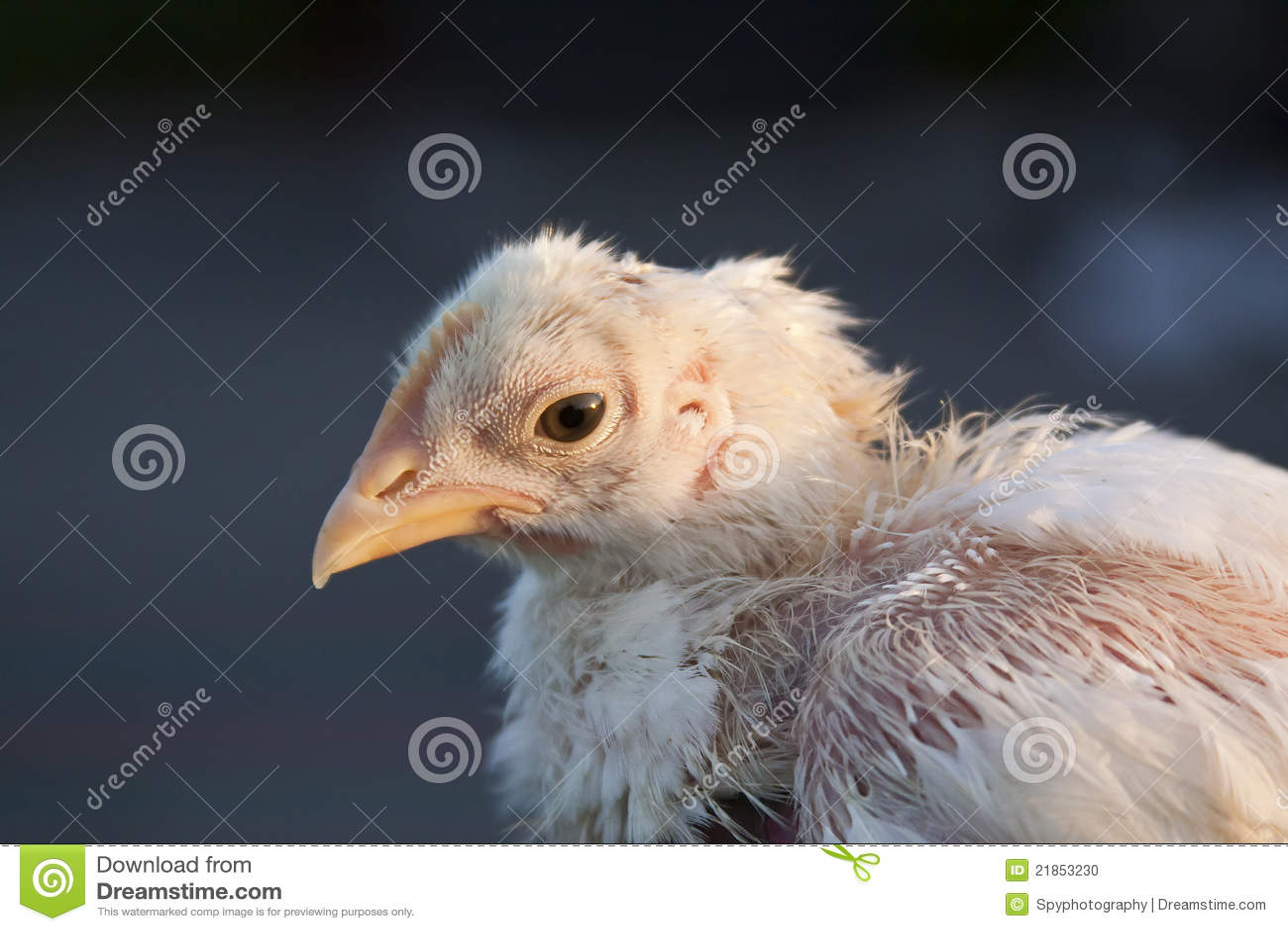 Beat Up Chick