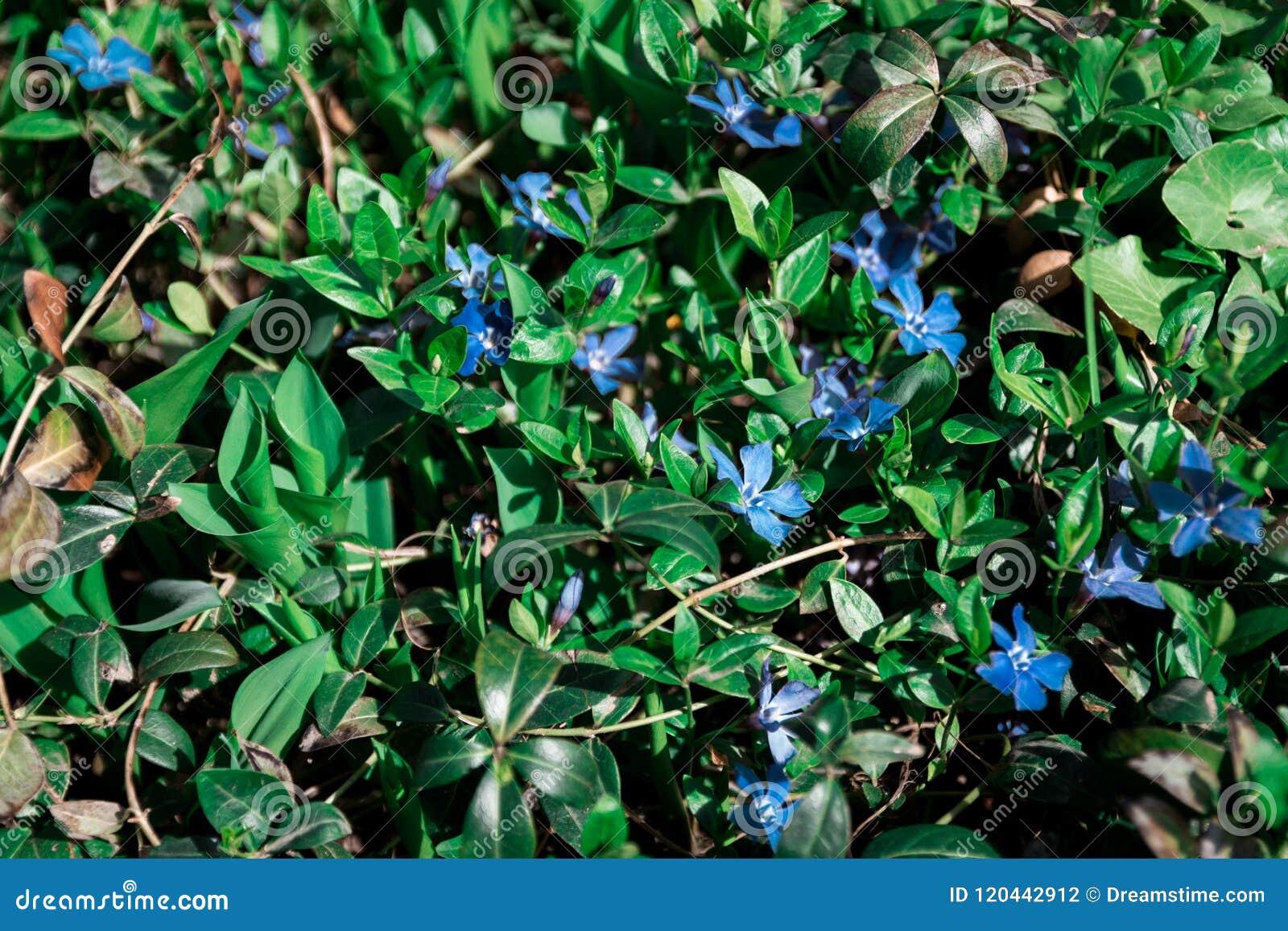 Beatiful flower in the garden