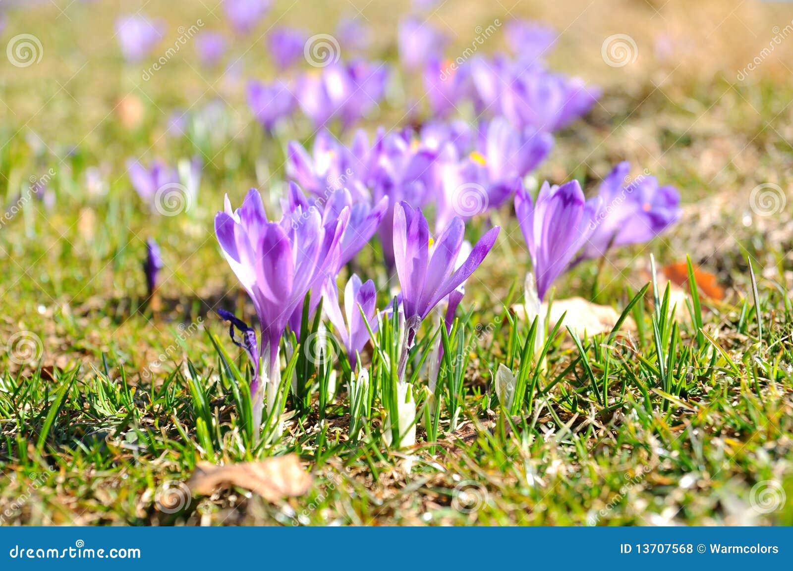 Beatifull Flowers In Spring Season Stock Photo Image Of Perfume