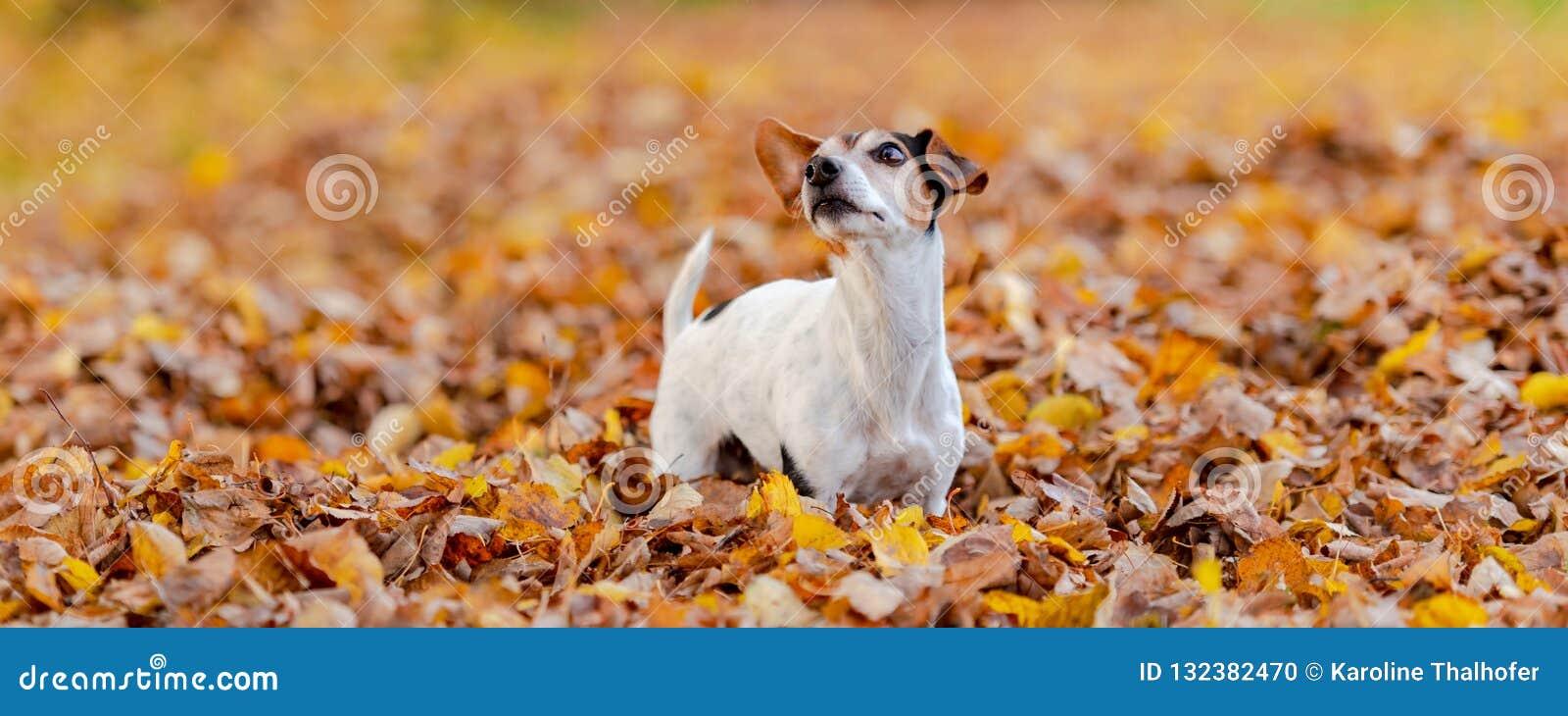 Beatifung kleine hond in de herfstbladeren
