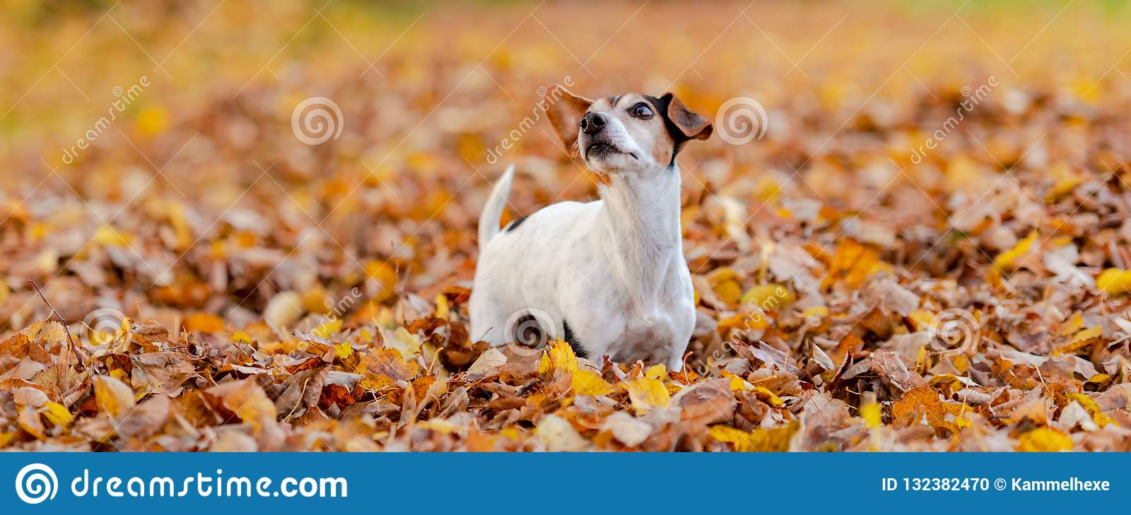 Beatifung small dog in autumn leaves