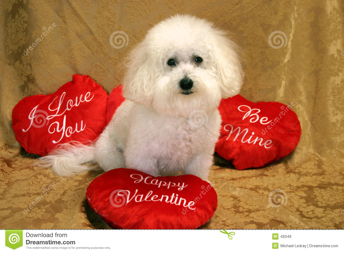 Download Beau #2 stock image. Image of frise, holiday, animal, puppy - 49349