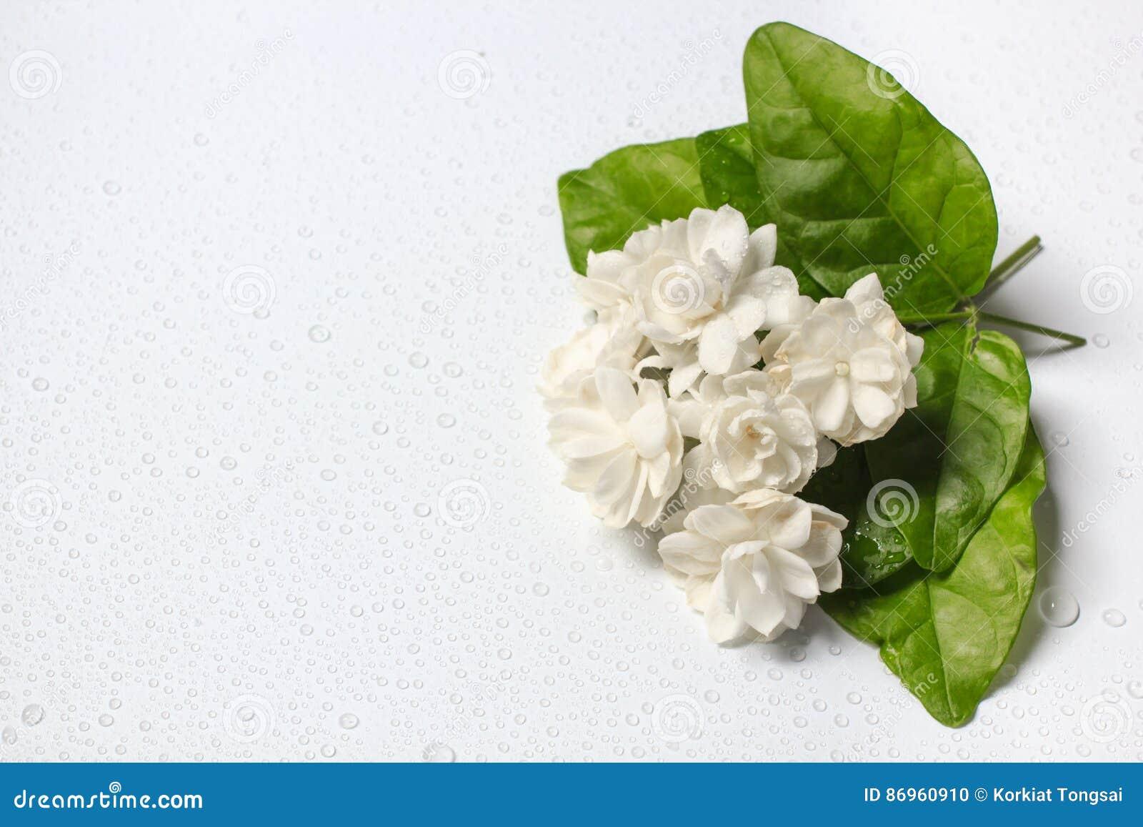 beau bouquet des fleurs blanches de jasmin photo stock. Black Bedroom Furniture Sets. Home Design Ideas