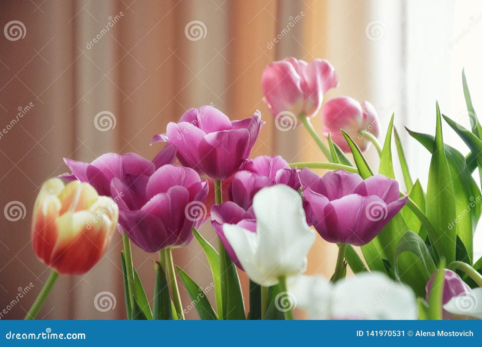 Beau bouquet des tulipes