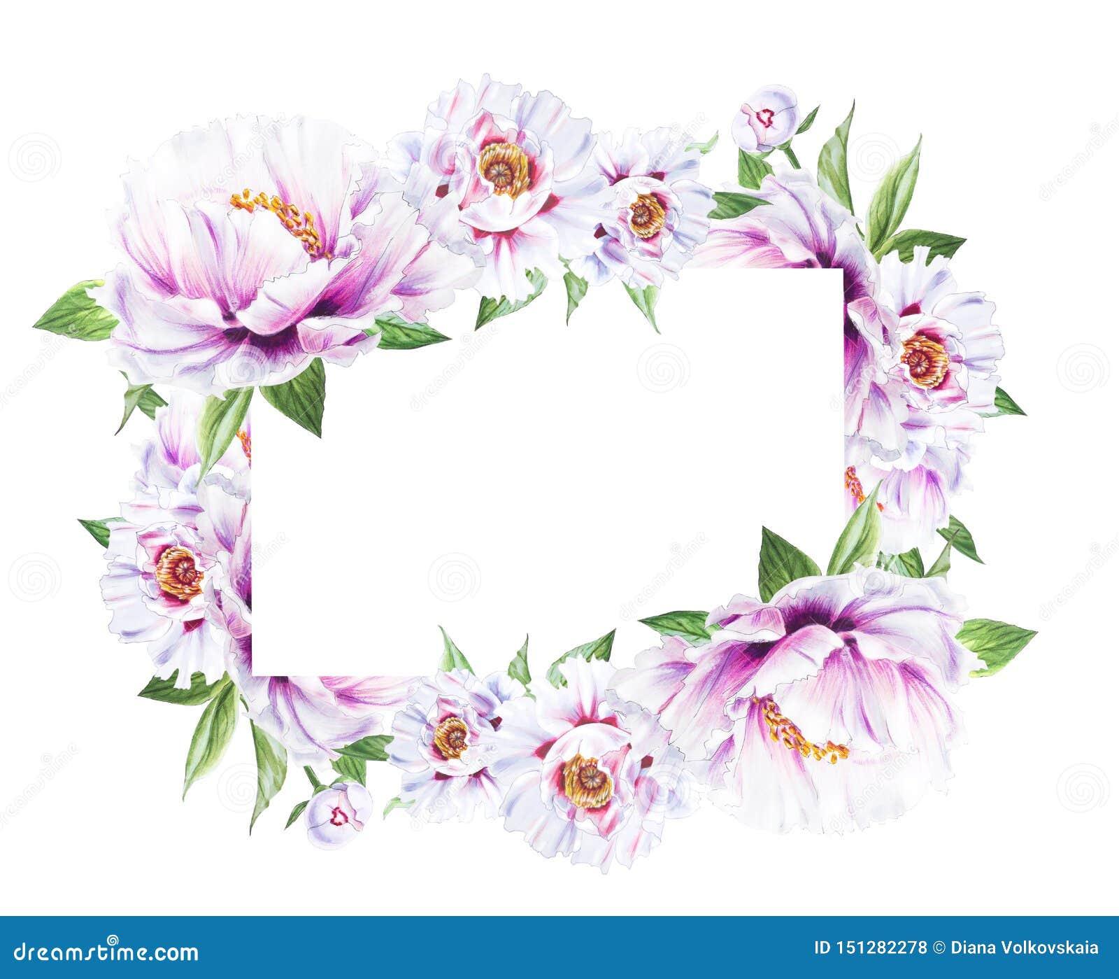 Beau cadre blanc de pivoine Bouquet des fleurs Impression florale Dessin de marqueur