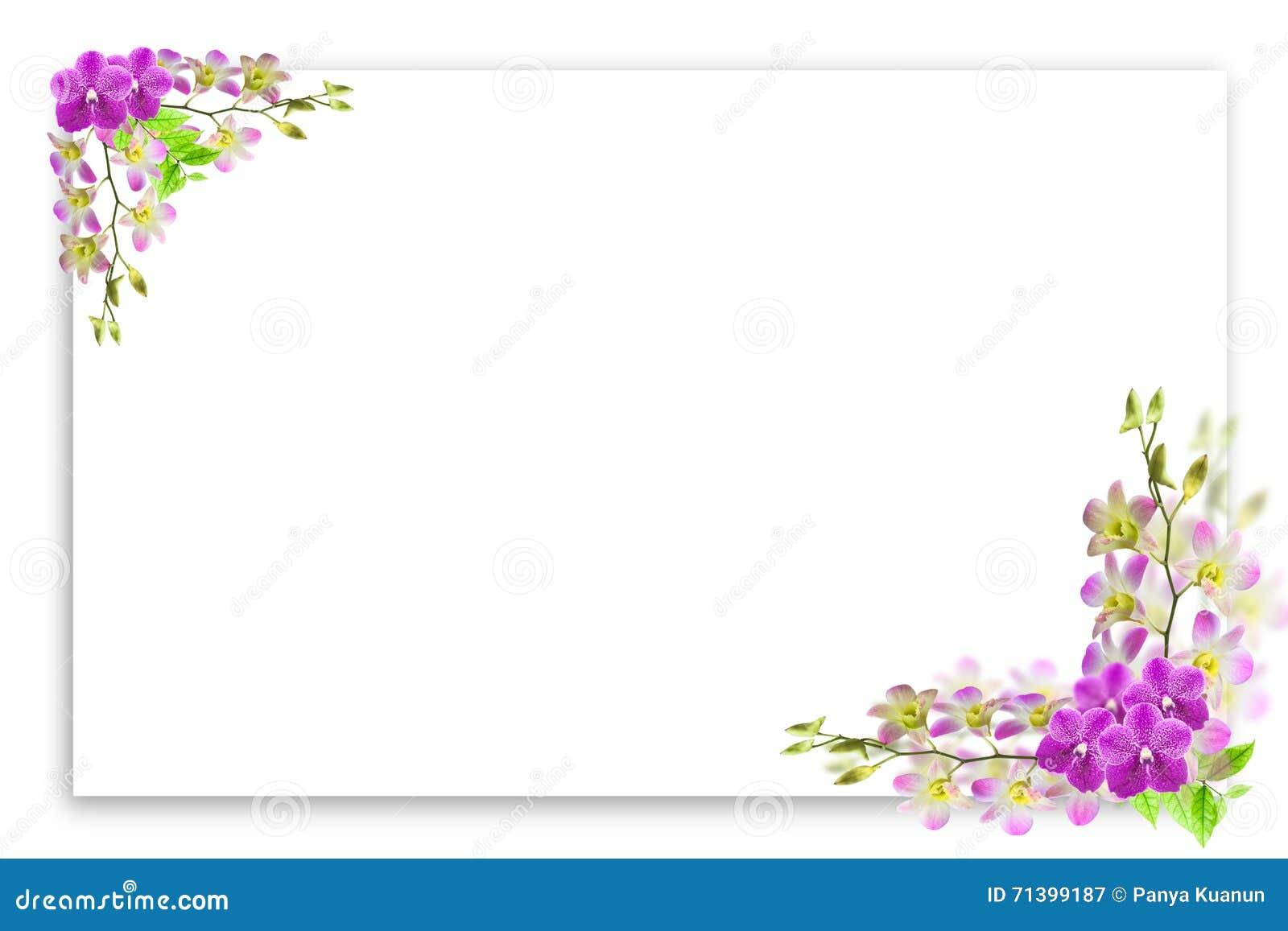 beau cadre de fleur d 39 orchid e sur le blanc avec l 39 endroit vide pour le texte photo stock. Black Bedroom Furniture Sets. Home Design Ideas