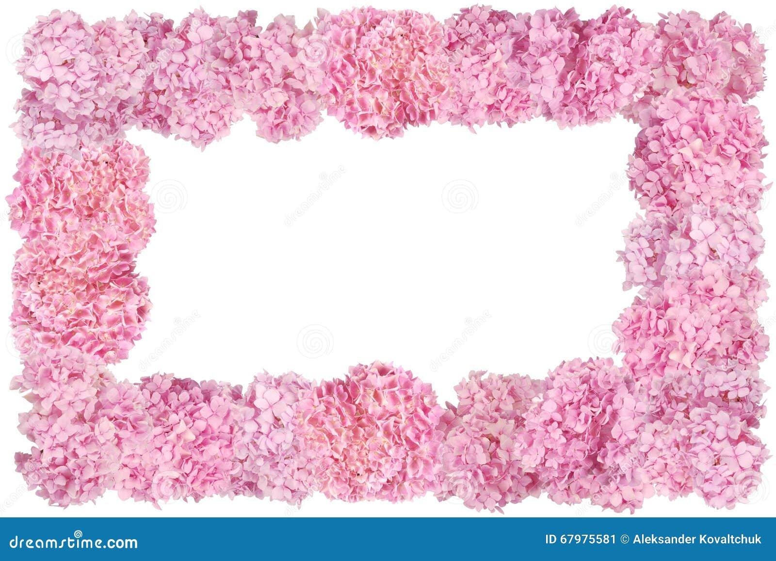 beau cadre rose de fleur d 39 hortensias image stock image du ornement pastel 67975581. Black Bedroom Furniture Sets. Home Design Ideas