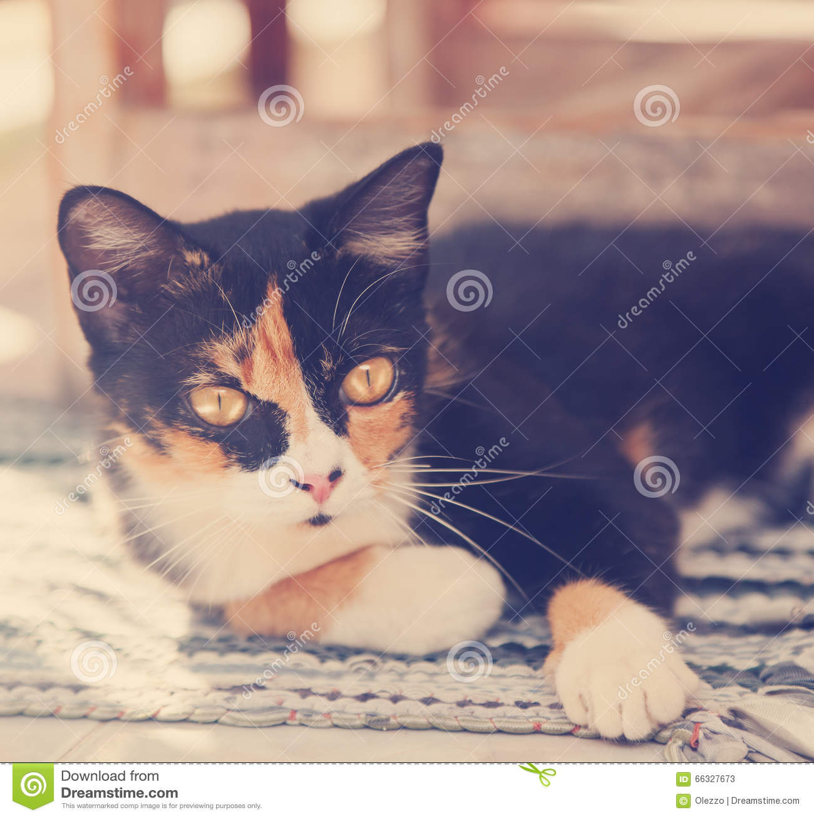 Beau chat multicolore