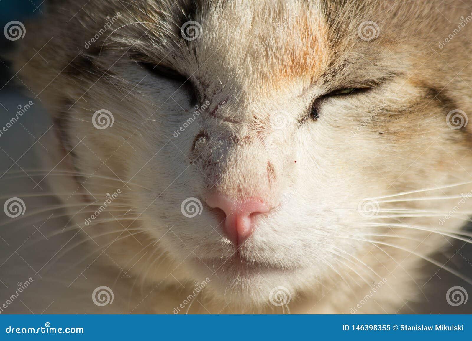 Beau chat sans abri gris dans la rue