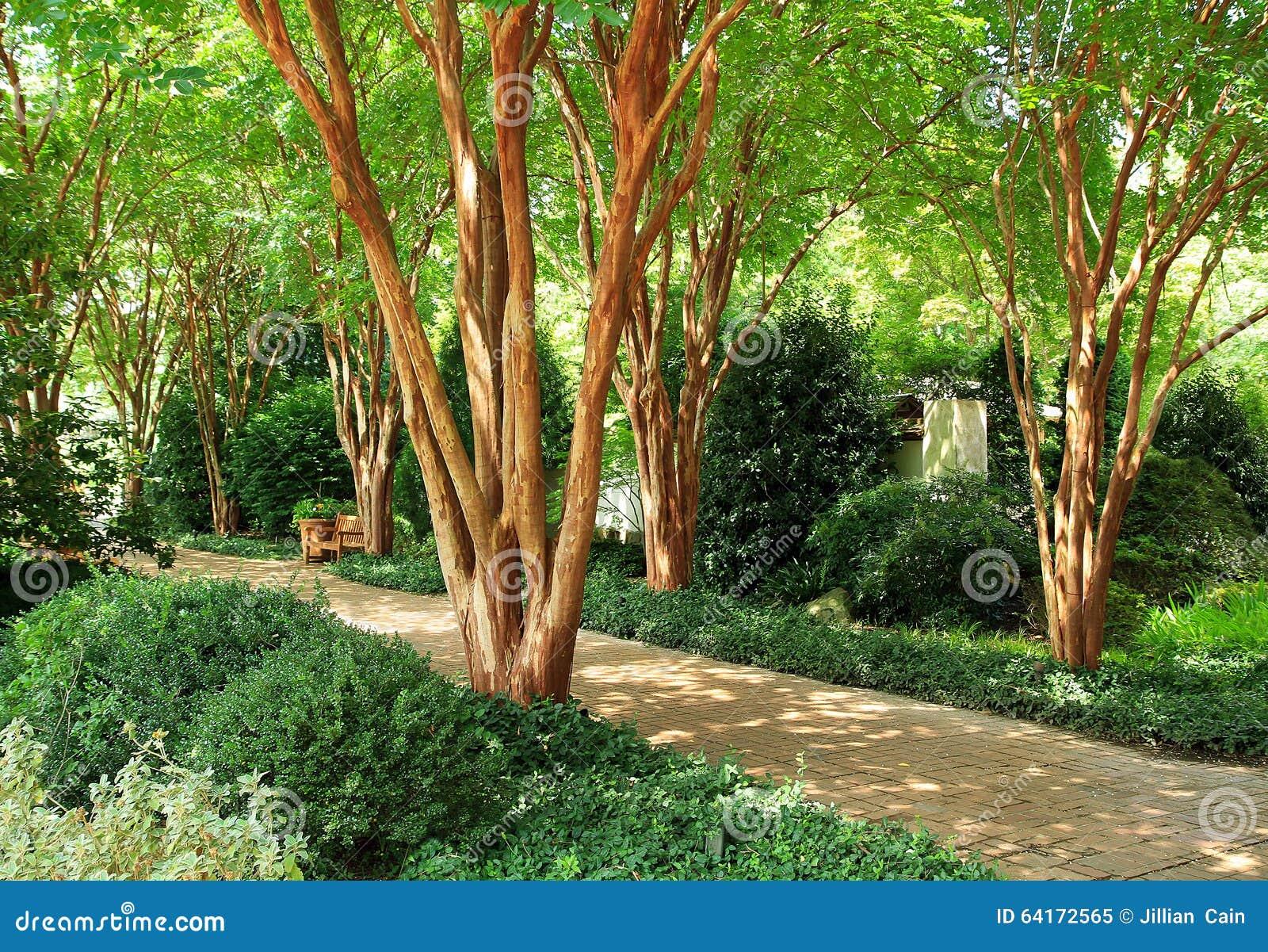 Beau chemin de jardin avec la lumi re du soleil tachet e for Arbres de jardin