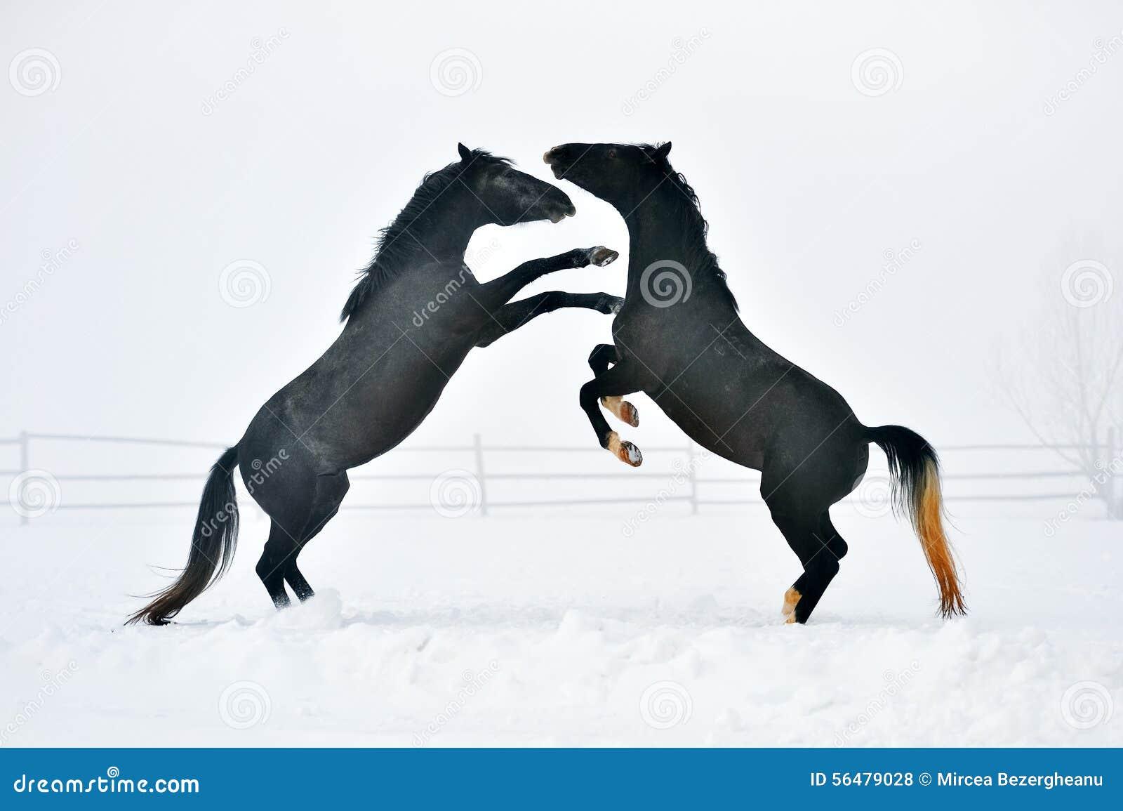 Beau cheval fonctionnant en hiver