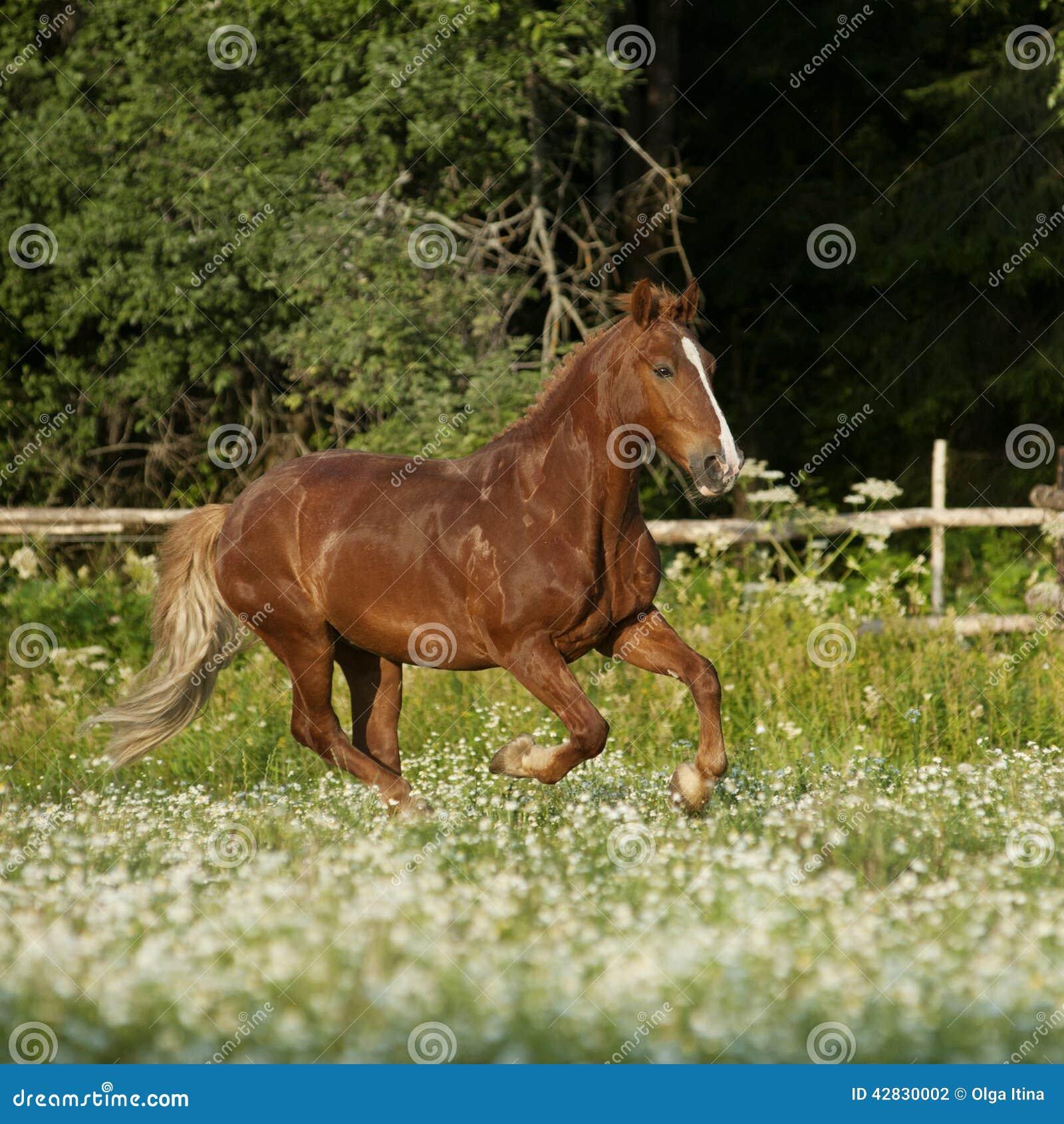 beau cheval gratuit de chtaigne trottant au champ avec des fleurs