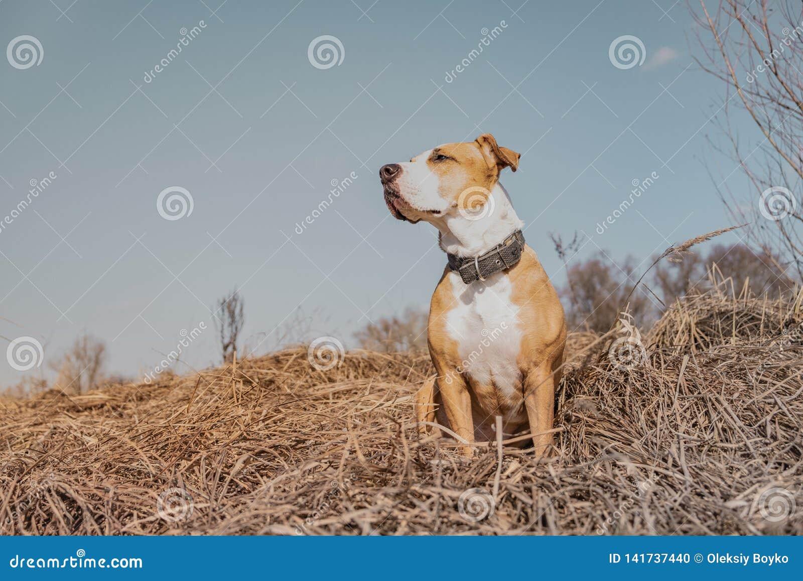 Beau chien dans le domaine, tir de héros