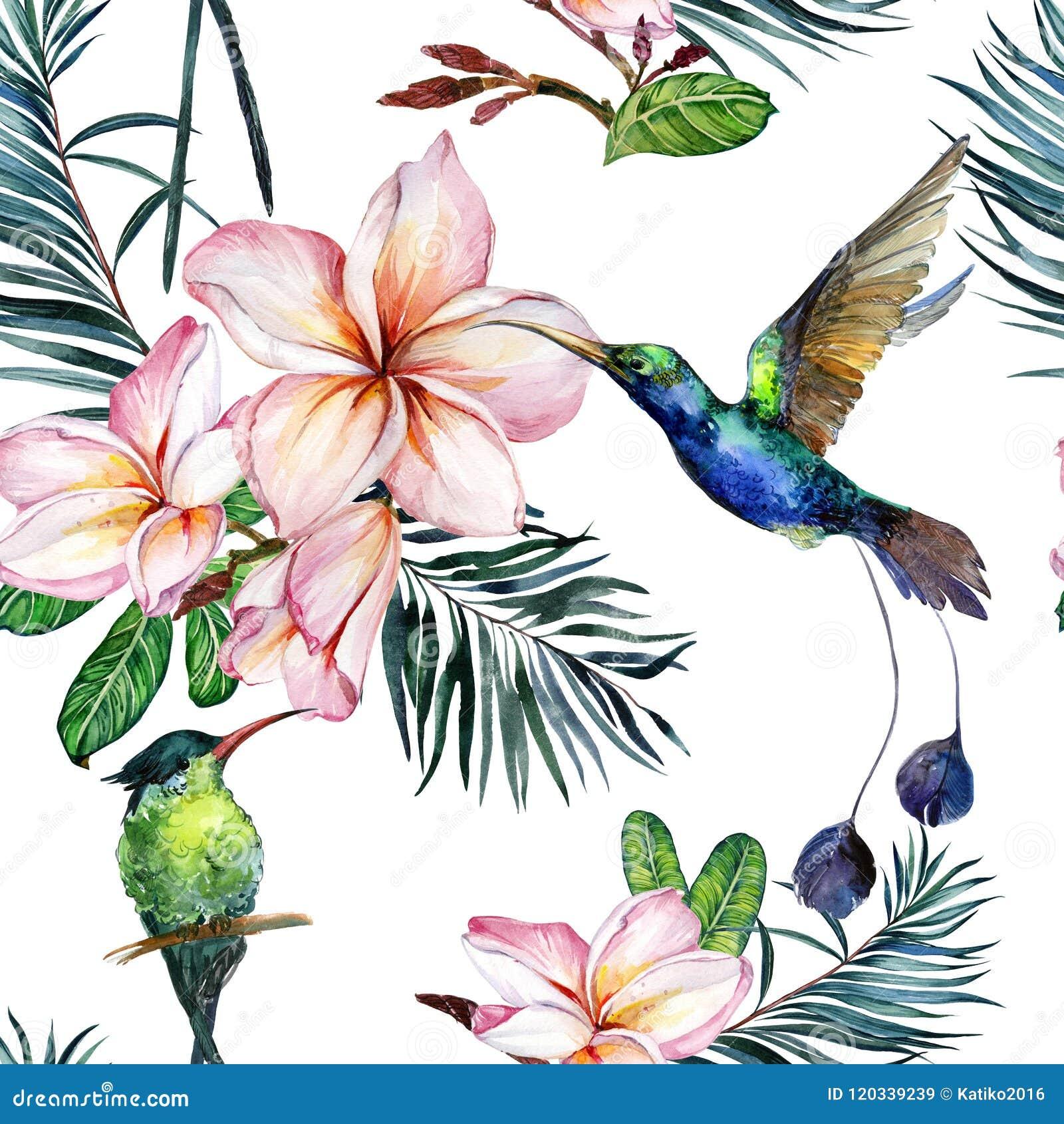 Beau colibri coloré et fleurs roses de plumeria sur le fond blanc Modèle sans couture tropical exotique Peinture de Watecolor