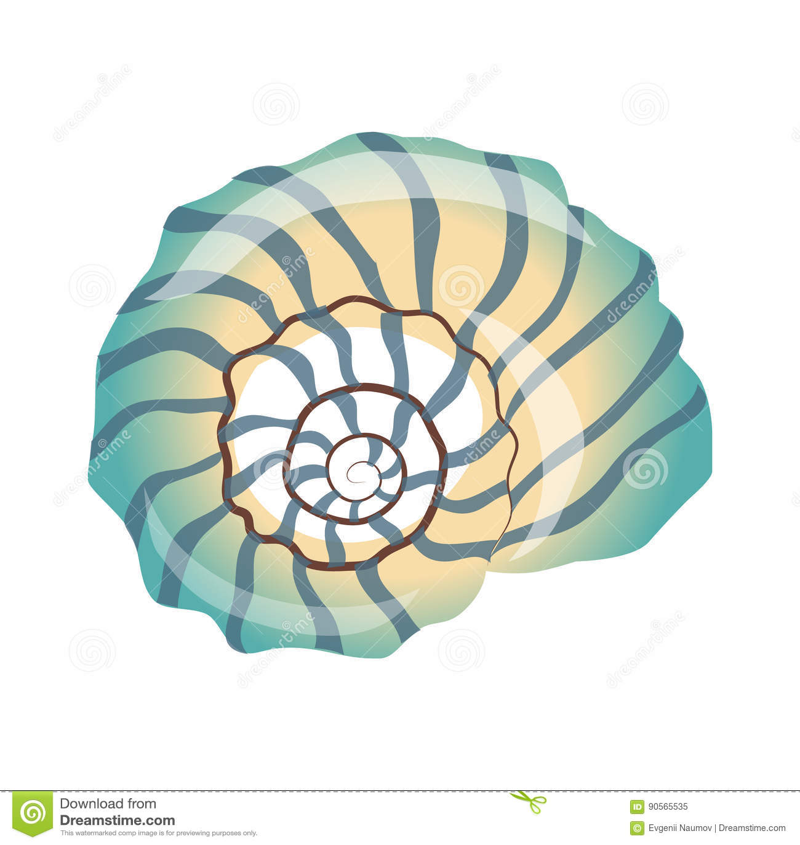 Beau coquillage bleu une coquille vide d 39 un mollusque de for Portent une coquille