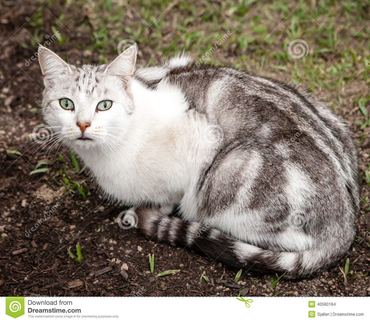 Unusual Black And White Striped Cat