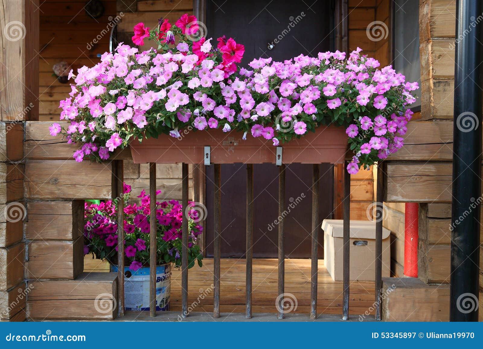 Beau jardin avec la boîte de fleur et les plantes en pot sur le porche
