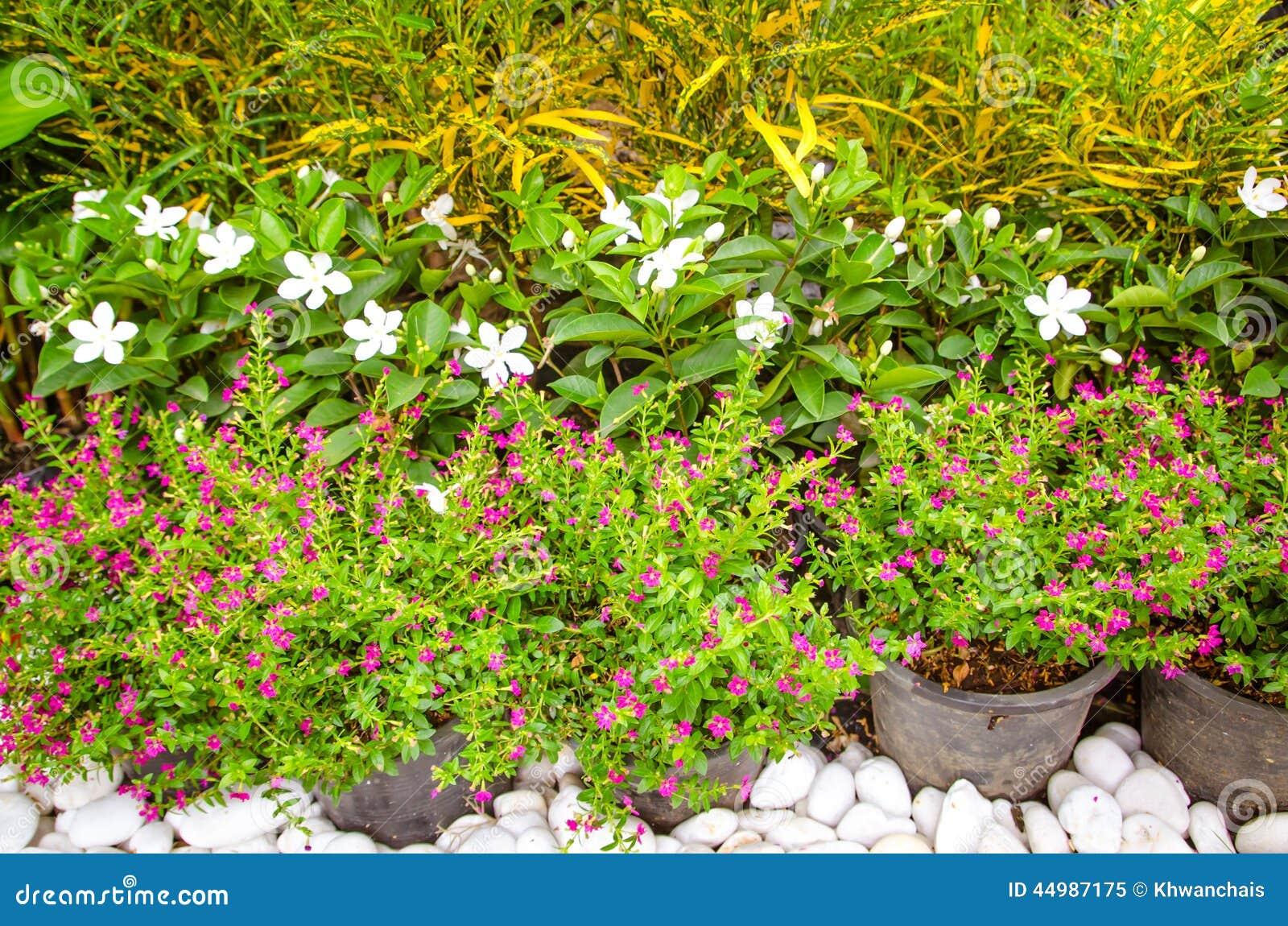 beau jardin d 39 t avec de petites fleurs image stock image 44987175. Black Bedroom Furniture Sets. Home Design Ideas