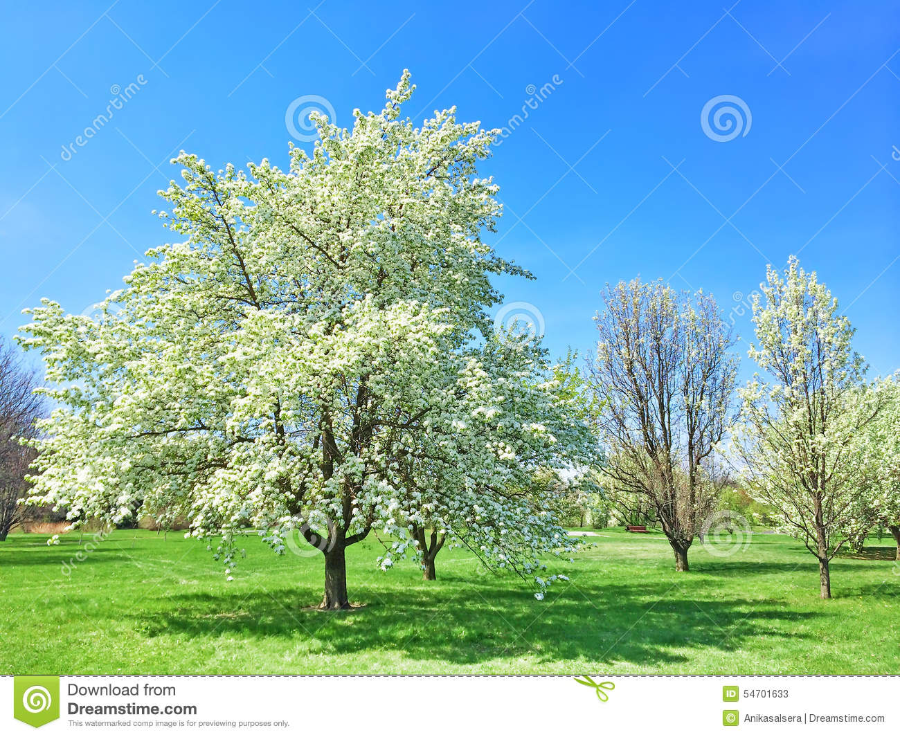 Beau Jardin De Floraison D 39 Arbre Au Printemps Photo Stock