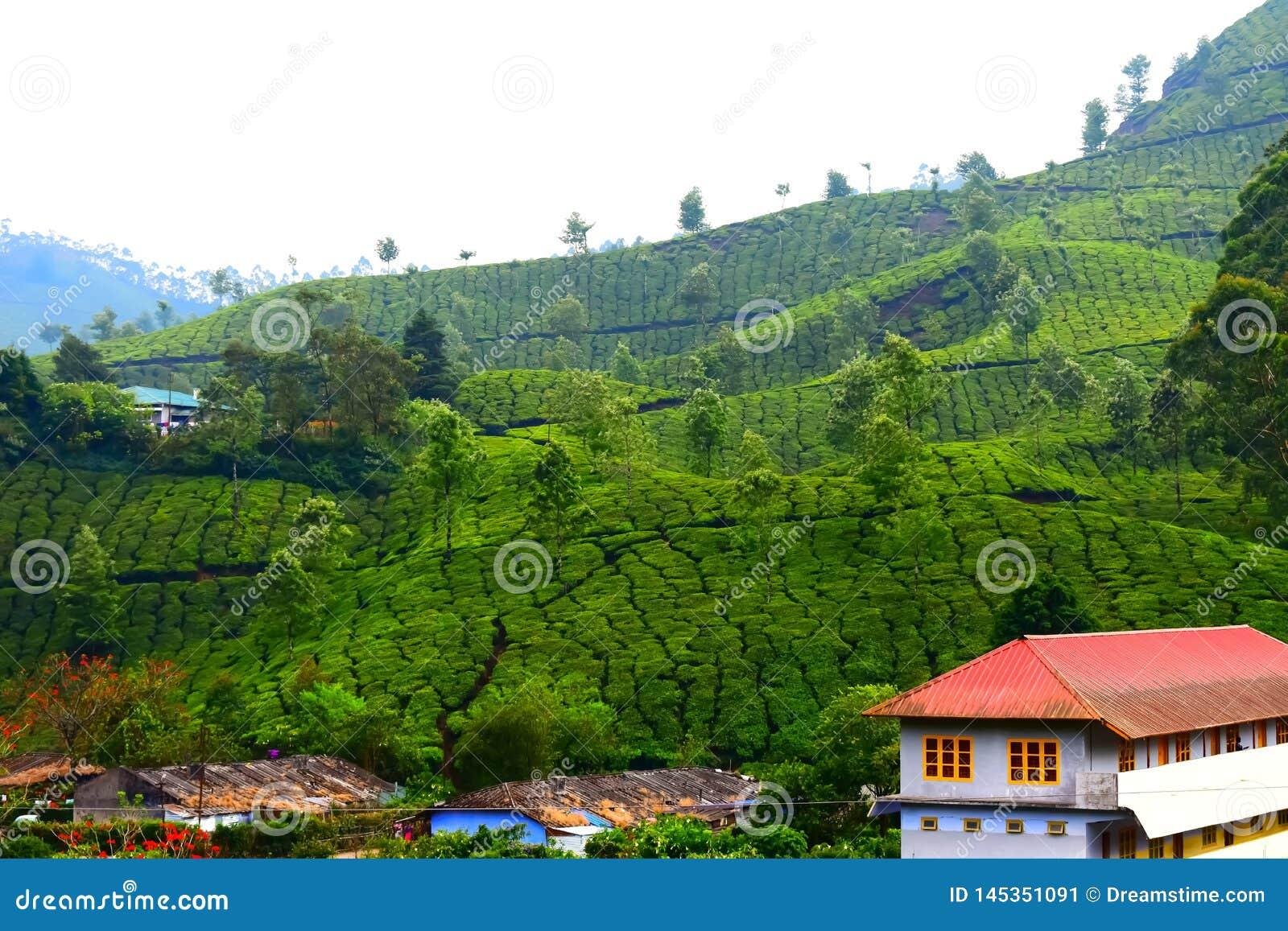 Beau jardin de thé avec la maison