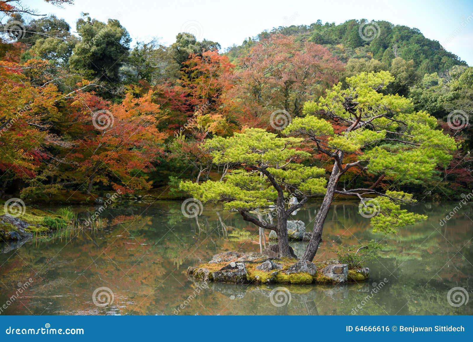 Beau Jardin Japonais En Automne Du Japon Photo Stock Image Du