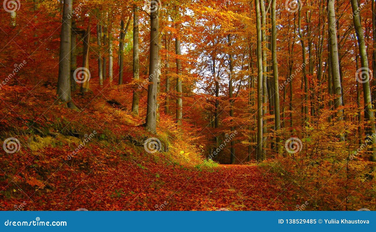 Beau jour ensoleillé dans la forêt d or d automne