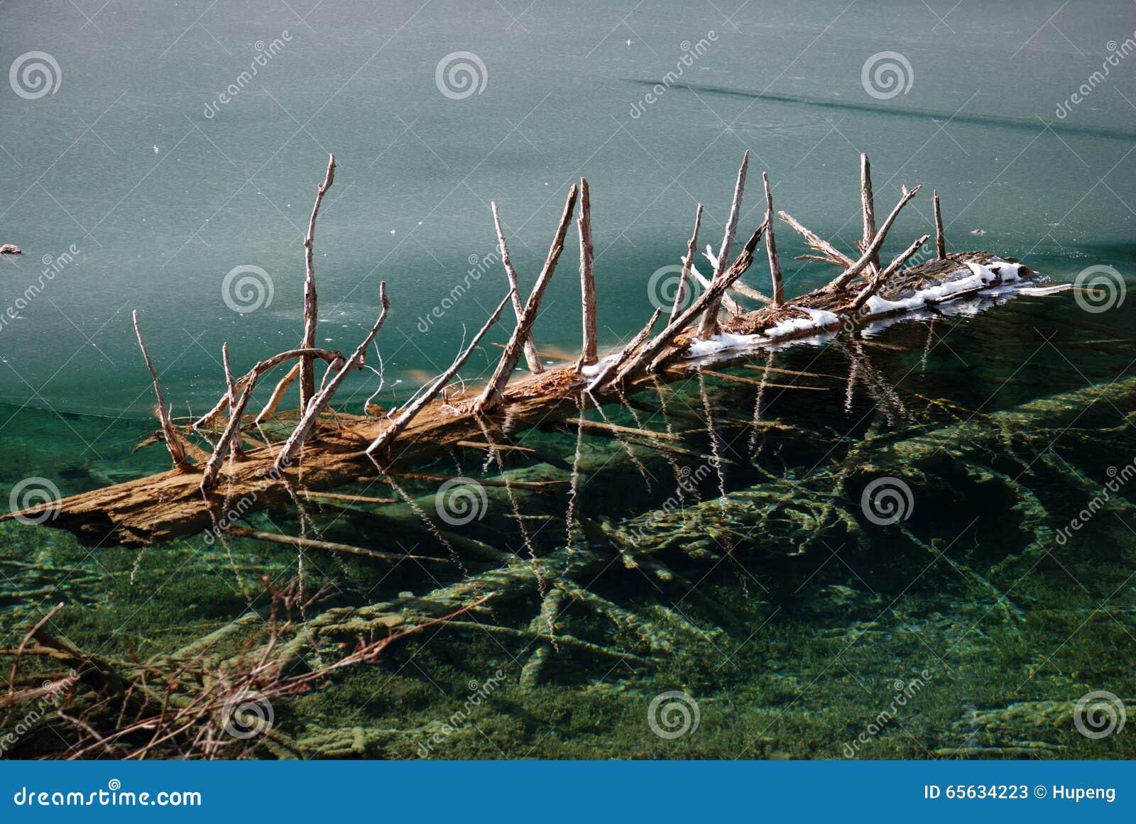 Beau lac avec l arbre dans le jiuzhaigou