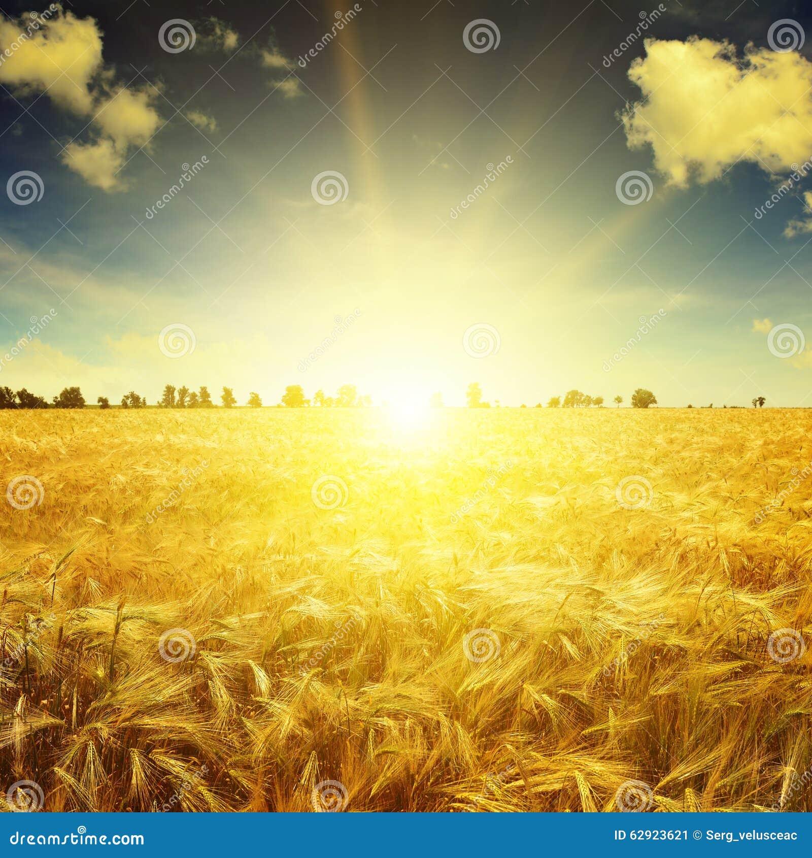 Beau lever de soleil au-dessus d un champ