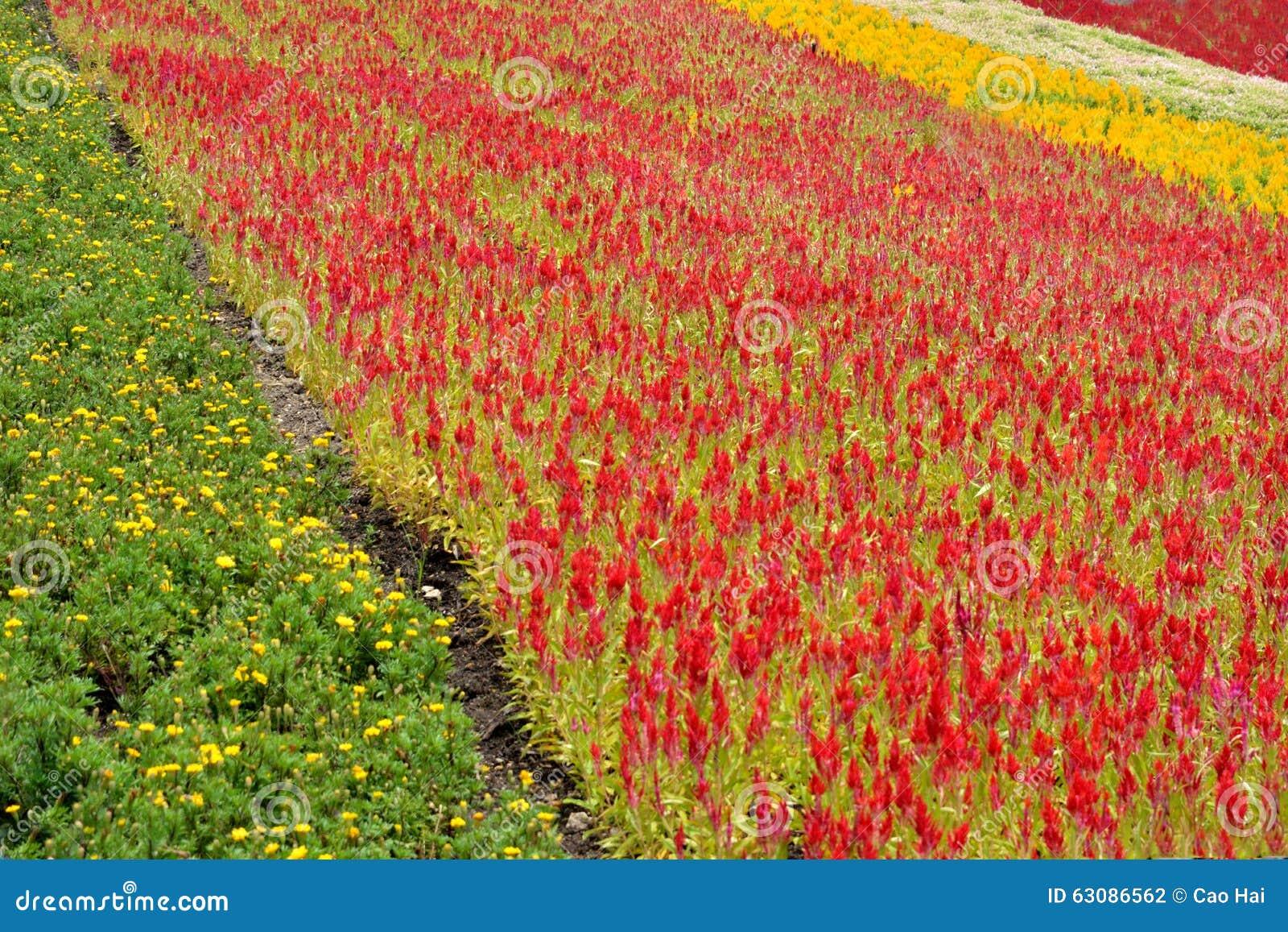 Download Beau Modèle De Gisement De Fleur Photo stock - Image du recouvrez, couleur: 63086562