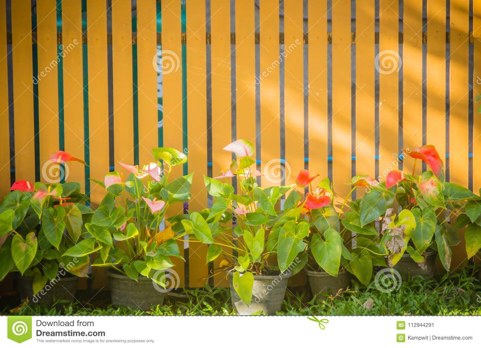 Beau Mur Vertical En Bois De Jardin Avec Le Pot De Fleur