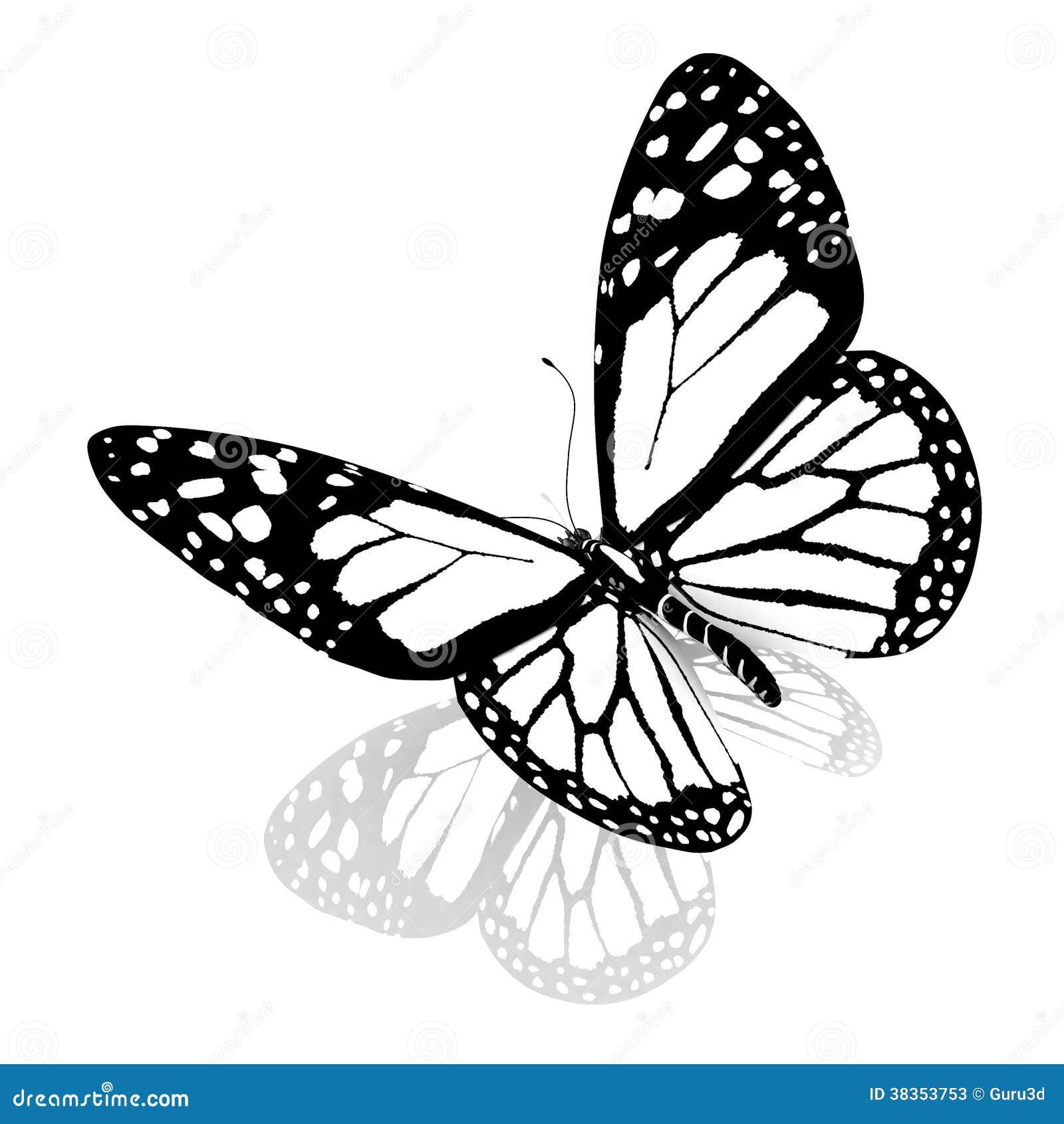 beau papillon noir et blanc photos stock image 38353753. Black Bedroom Furniture Sets. Home Design Ideas
