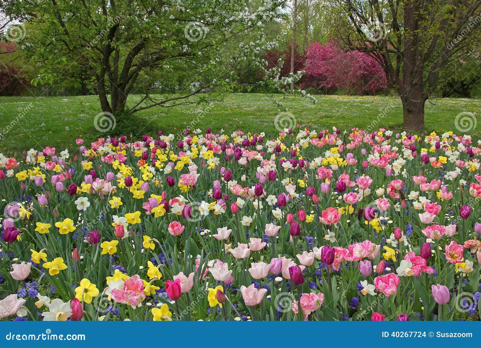 Beau parterre avec les fleurs roses et jaunes photo stock image 40267724 for Parterre de roses photos