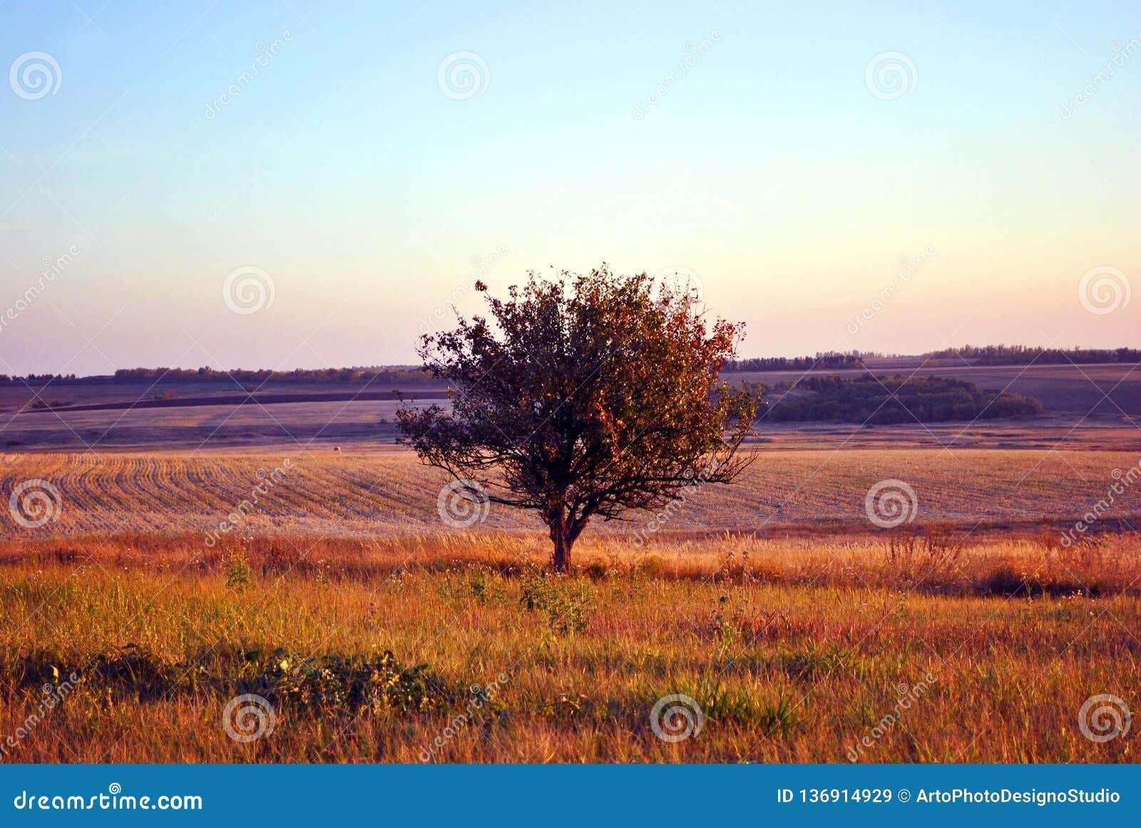 Beau paysage égalisant, ciel pourpre-bleu, pommier isolé dans le pré d herbe, collines avec le champ labouré