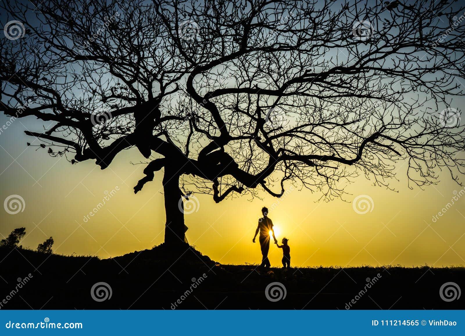 Beau paysage avec la silhouette d arbres au coucher du soleil avec un enfant tenant sa main de père sous l arbre