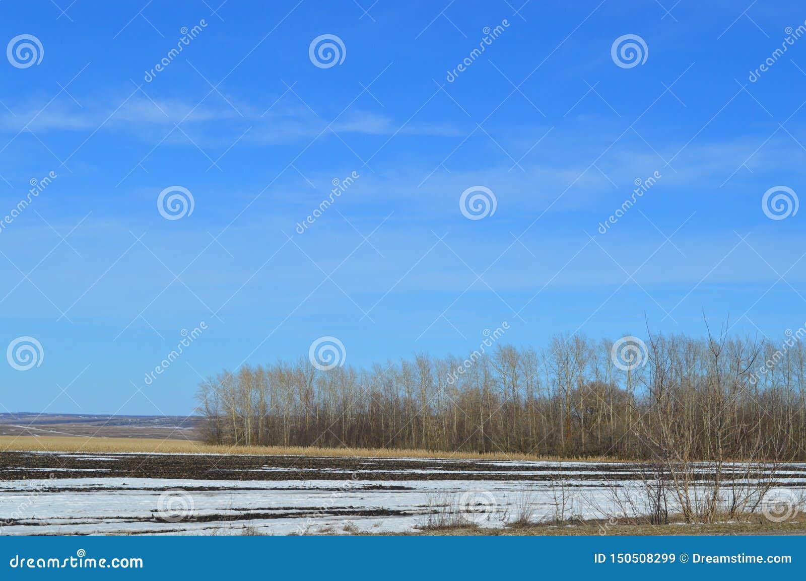 Beau paysage avec le champ Arbres nus et une peu de neige