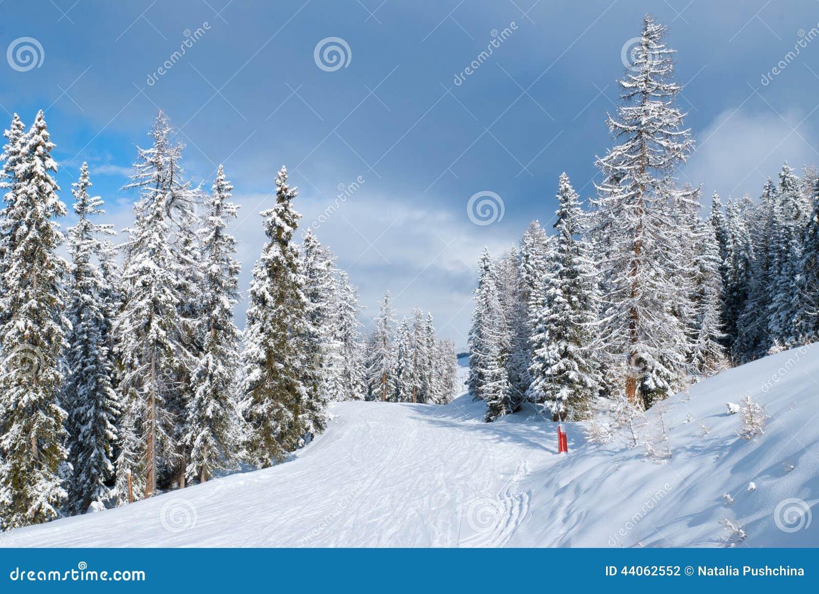 beau paysage d 39 hiver avec des sapins photo stock image 44062552. Black Bedroom Furniture Sets. Home Design Ideas
