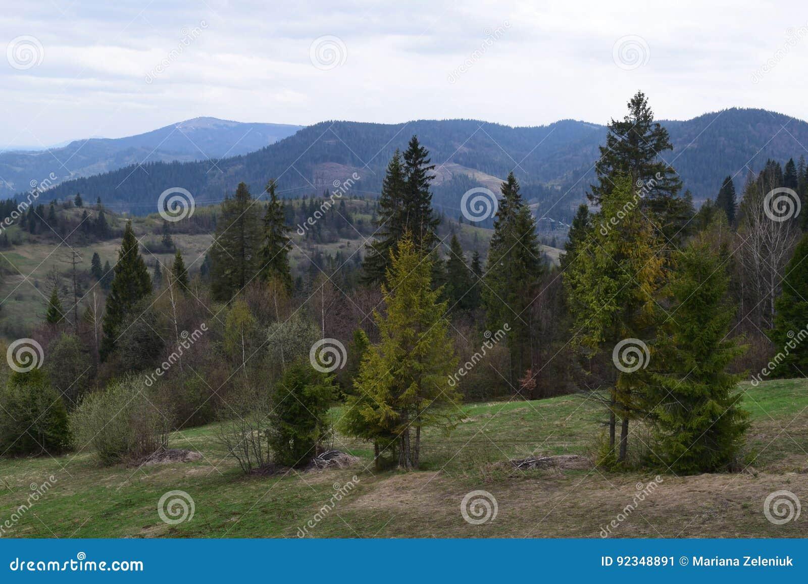 Beau paysage de montagne d été,