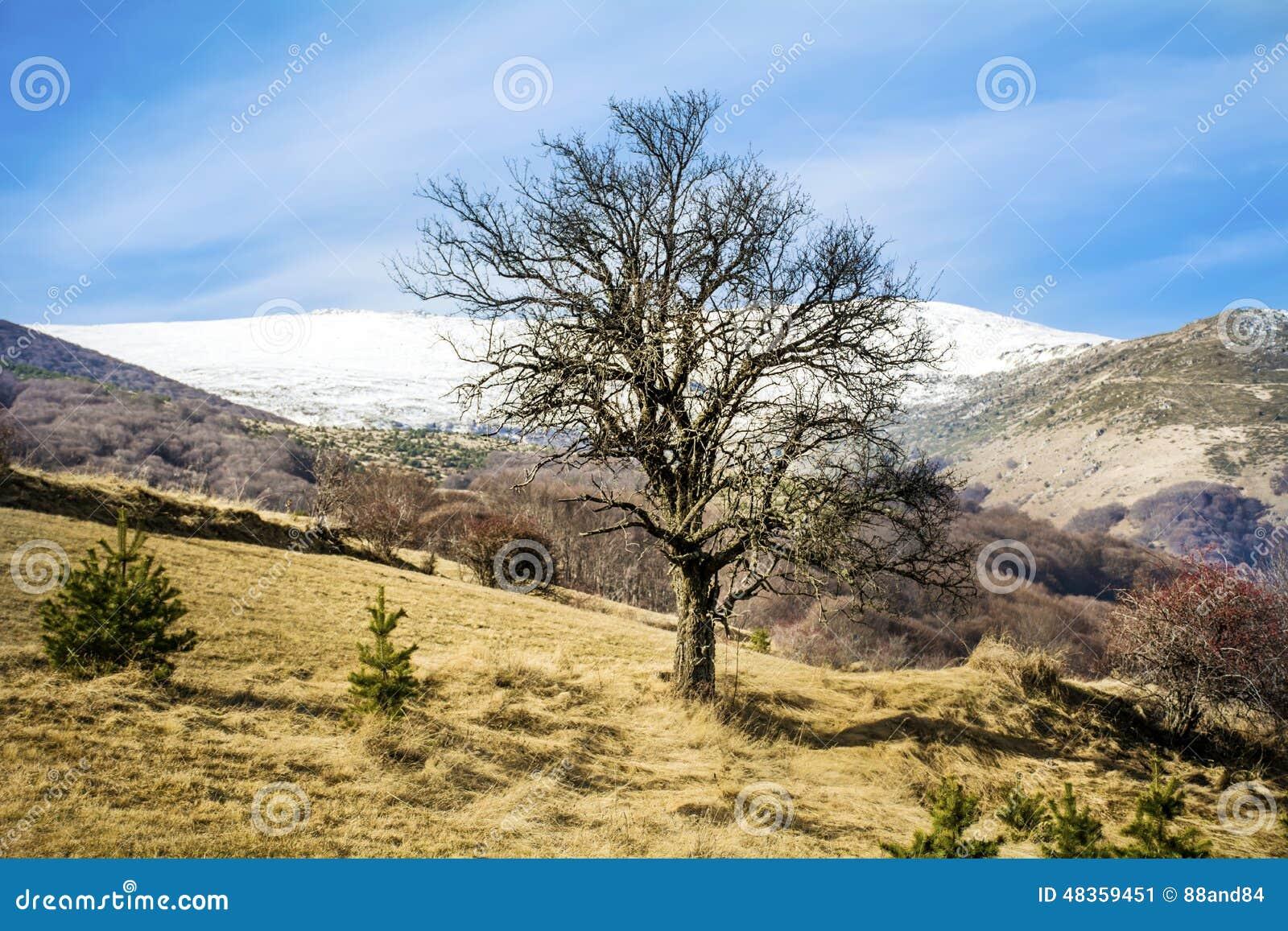 beau paysage de montagne d 39 hiver de bulgarie image stock image 48359451. Black Bedroom Furniture Sets. Home Design Ideas