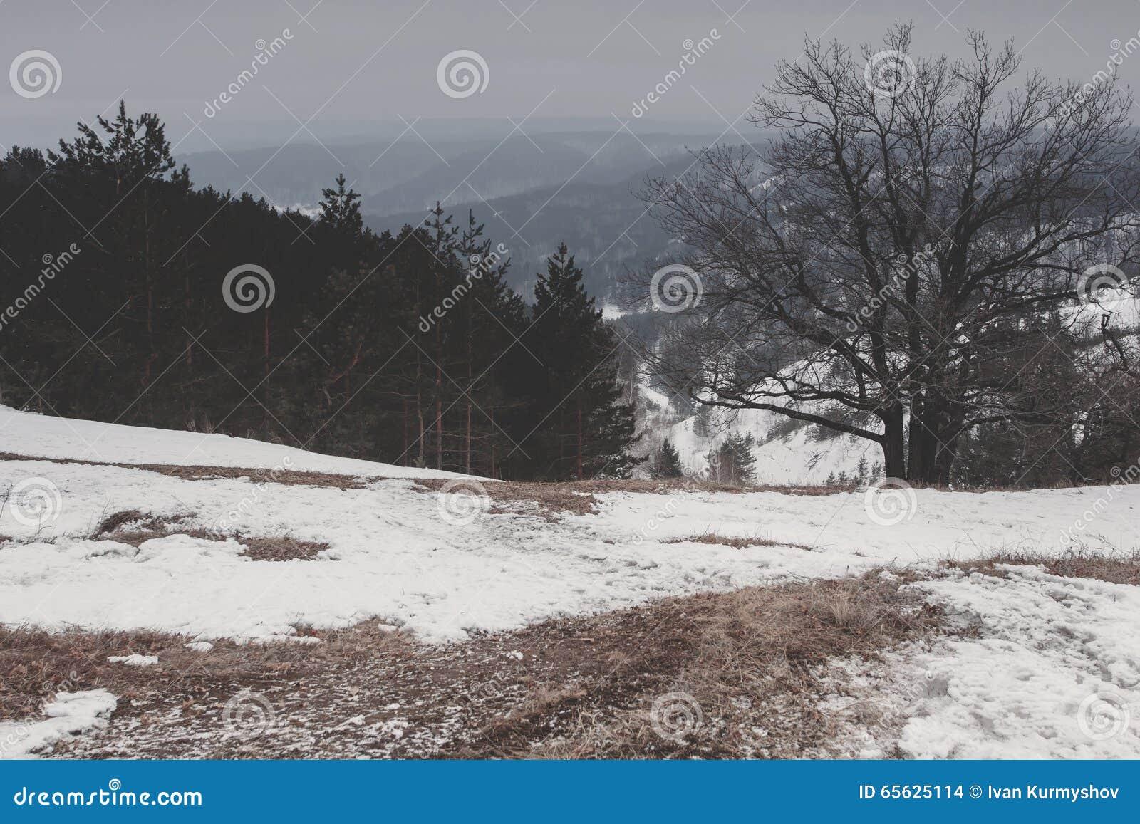 Beau paysage de nature d hiver Forêt de montagne de neige